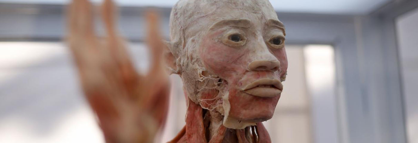 Bodies: La exposición de cuerpos humanos reales en Lima