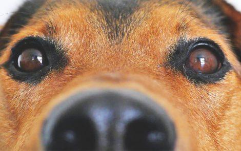 10 libros que todos los amantes de perros deben leer