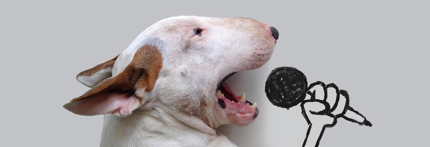 Cuentas de instagram de perritos que no puedes dejar de seguir Parte I