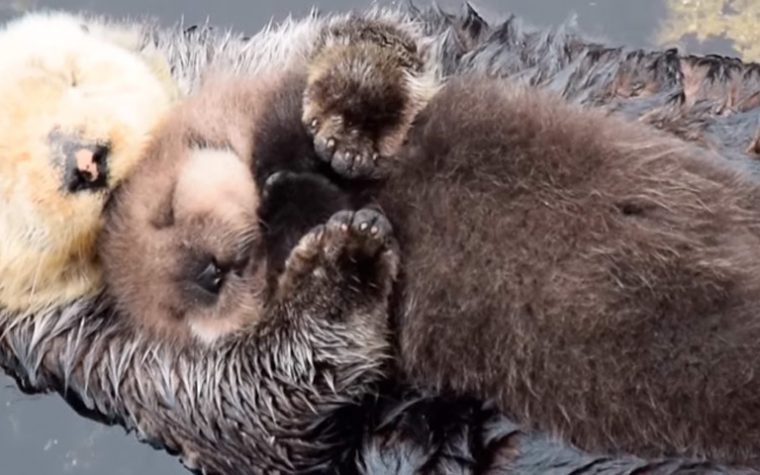 10 fotos de animales en Instagram que derretirán tu corazón