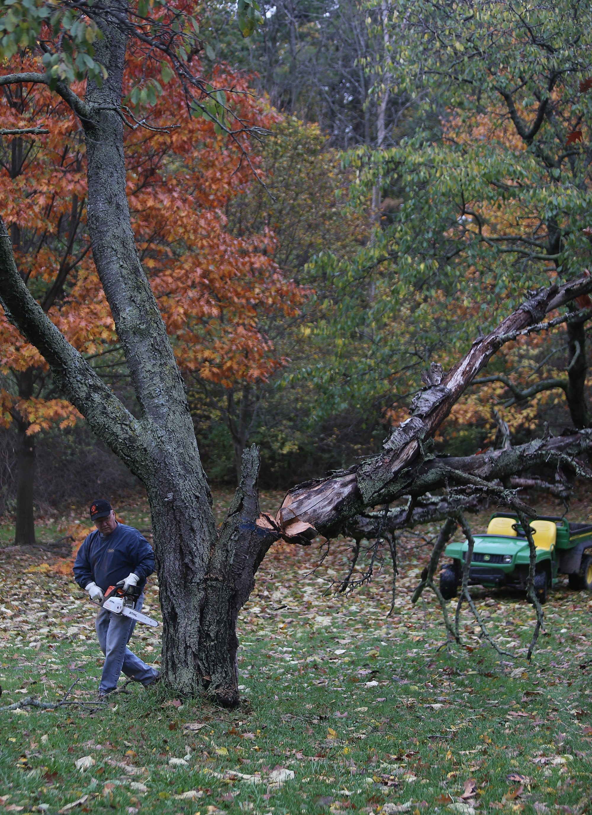 Glenn Caverly, supervisor at Joseph Davis State Park in Lewiston, works to clear a dead tree as the town pursues efforts to improve and operate the largely underdeveloped and underused 388-acre site under a 20-year contract with the state.