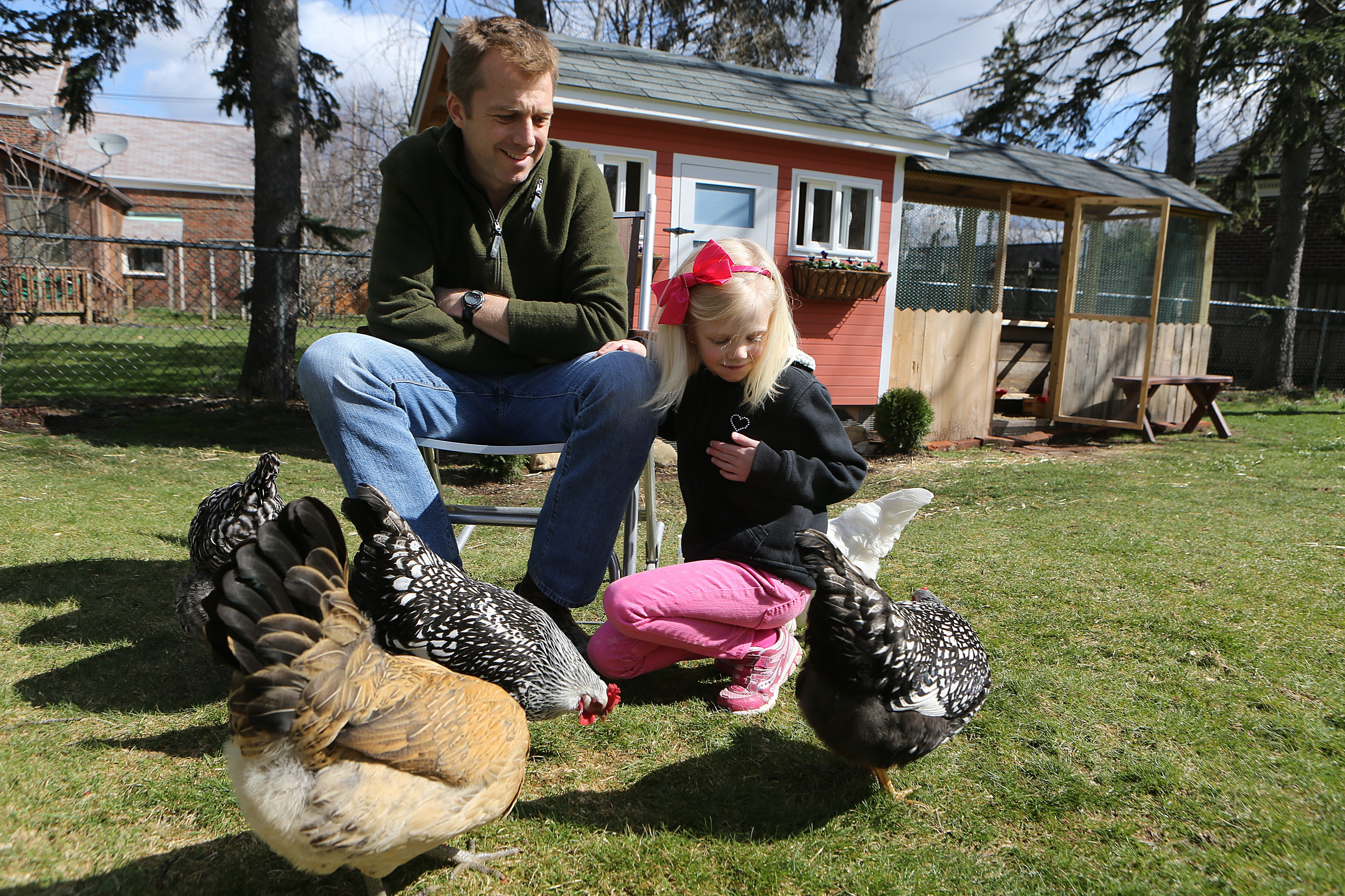 Brooks Anderson and his 6-year-old daughter, Amelia, sit Sunday in front of the chicken coop Brooks Anderson built for the six chickens they want to keep in the backyard of their Amherst home. Town officials are not inclined to let them.