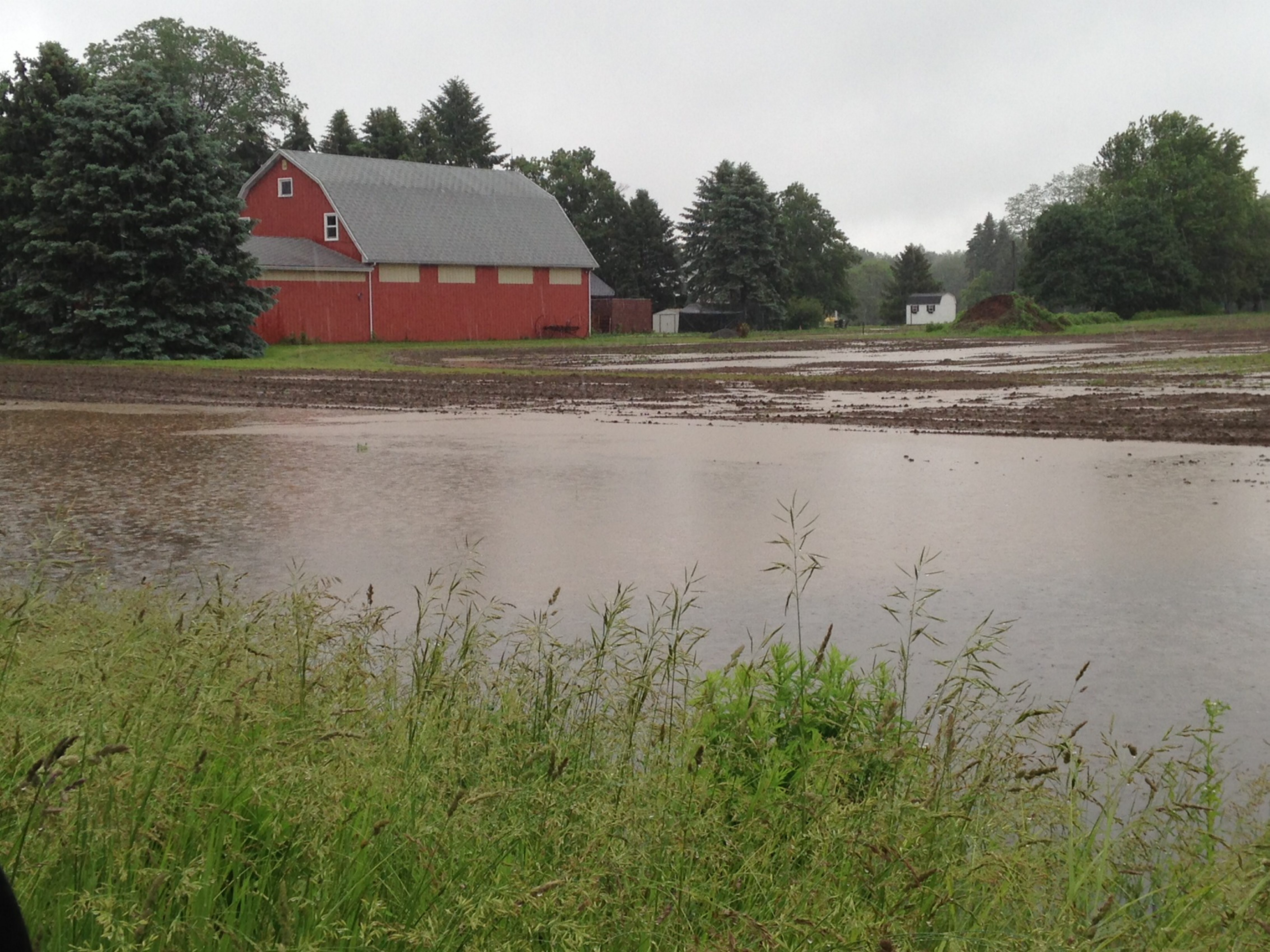 """Knee-high by July,"" instead of its traditional reference to corn, now stands for the standing water in this cornfield at the corner of Bullis and Girdle roads in the town of Elma."