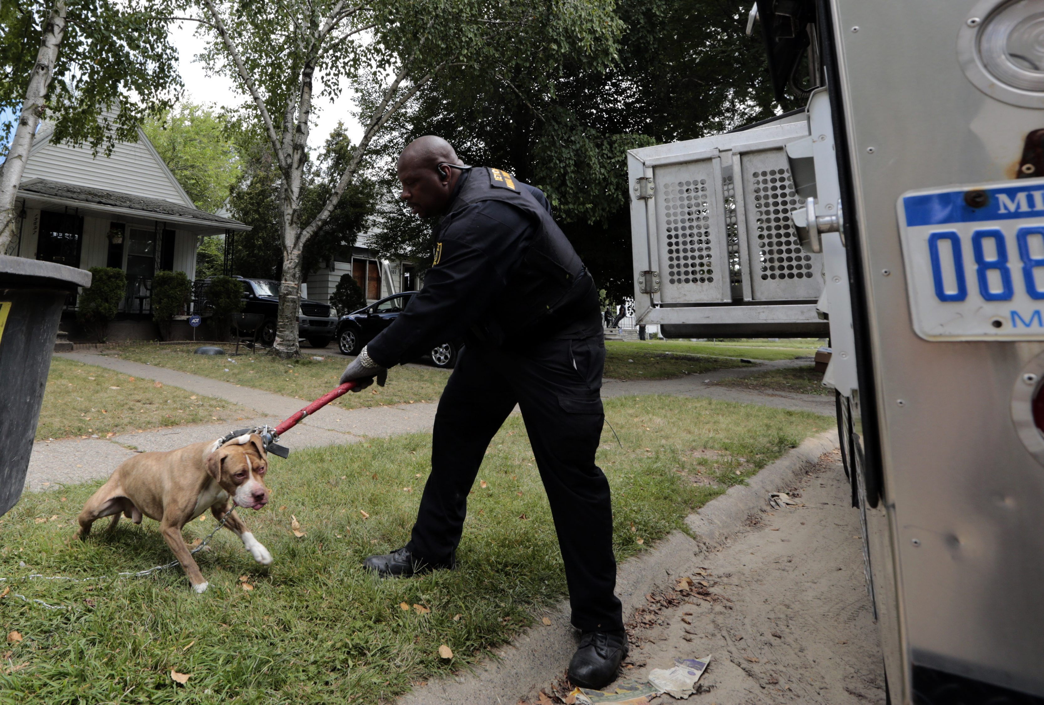 Malachi Jackson, an animal-control officer in Detroit, secures a pit bull terrier en route to quarantine after biting a person. Roaming packs of dogs are posing daunting problems.