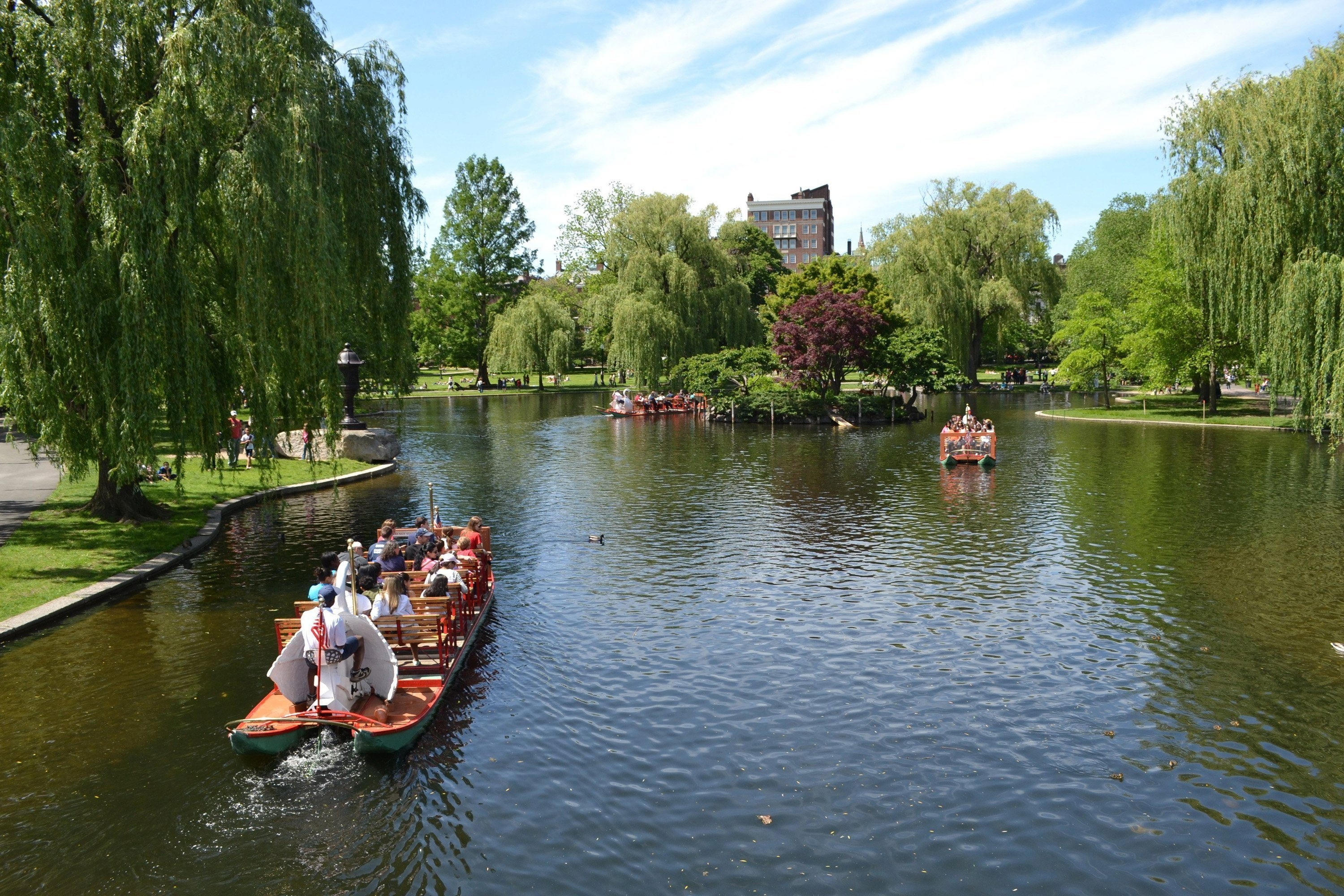 Swan boats are one of the major attractions in the Public Garden at the Boston Common, the oldest park in America.