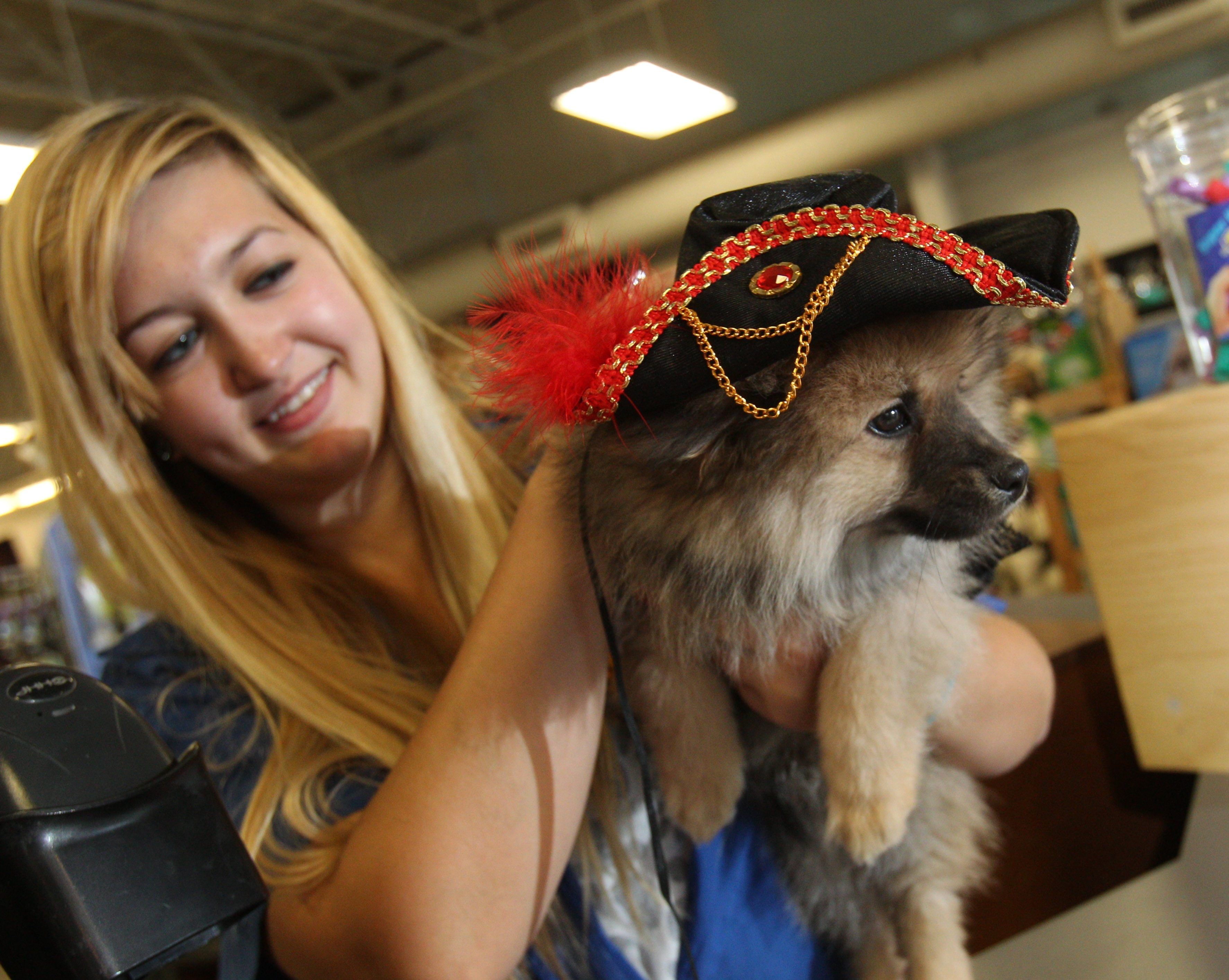 Kayla Zannis dresses up a Pomeranian puppy as a pirate at Steve's pet store on Tuesday.