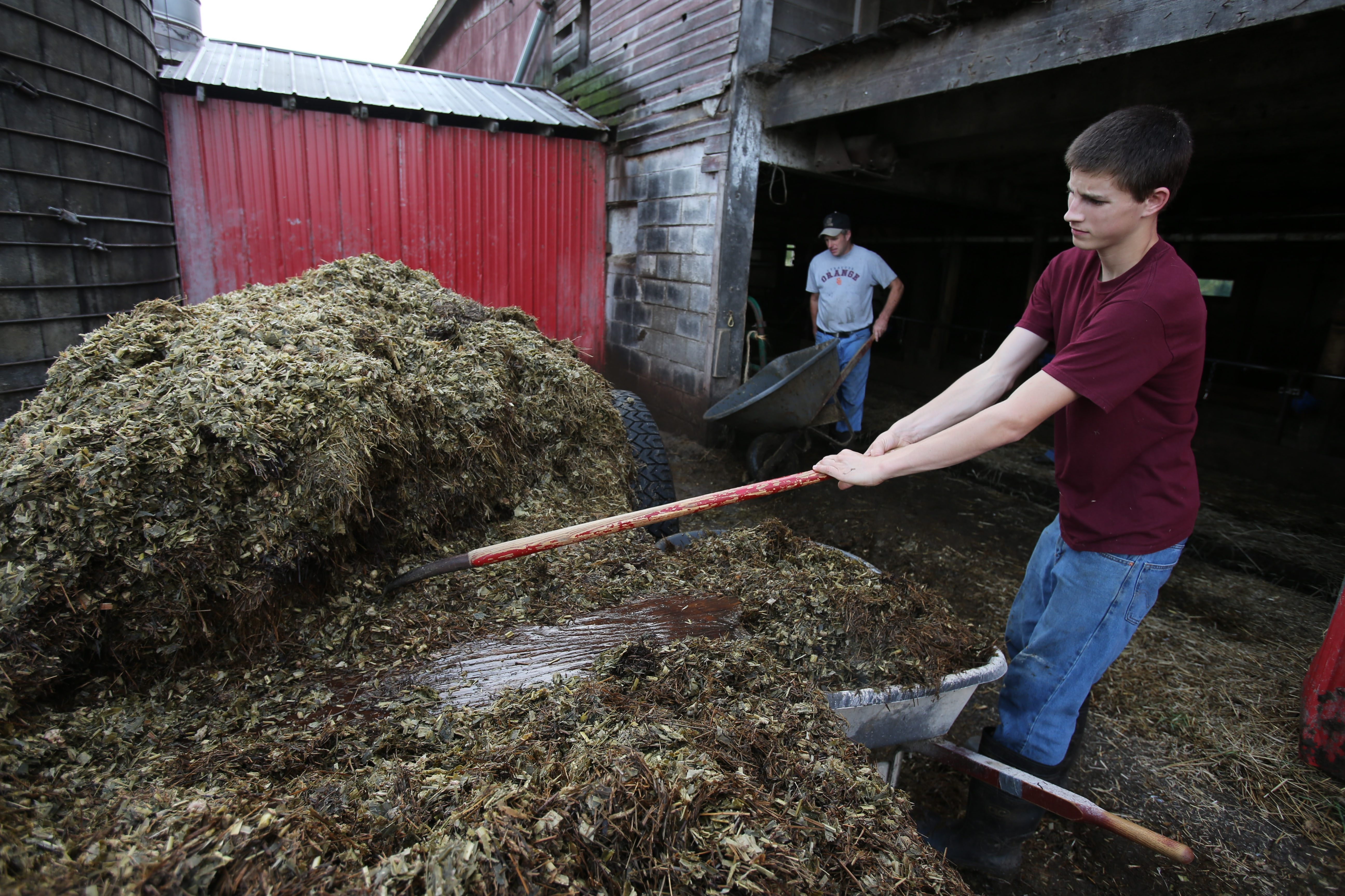 Christopher Sweeney, 16, right, and his father, John, load feed for the cows at the family's Maple View Dairy in Appleton.