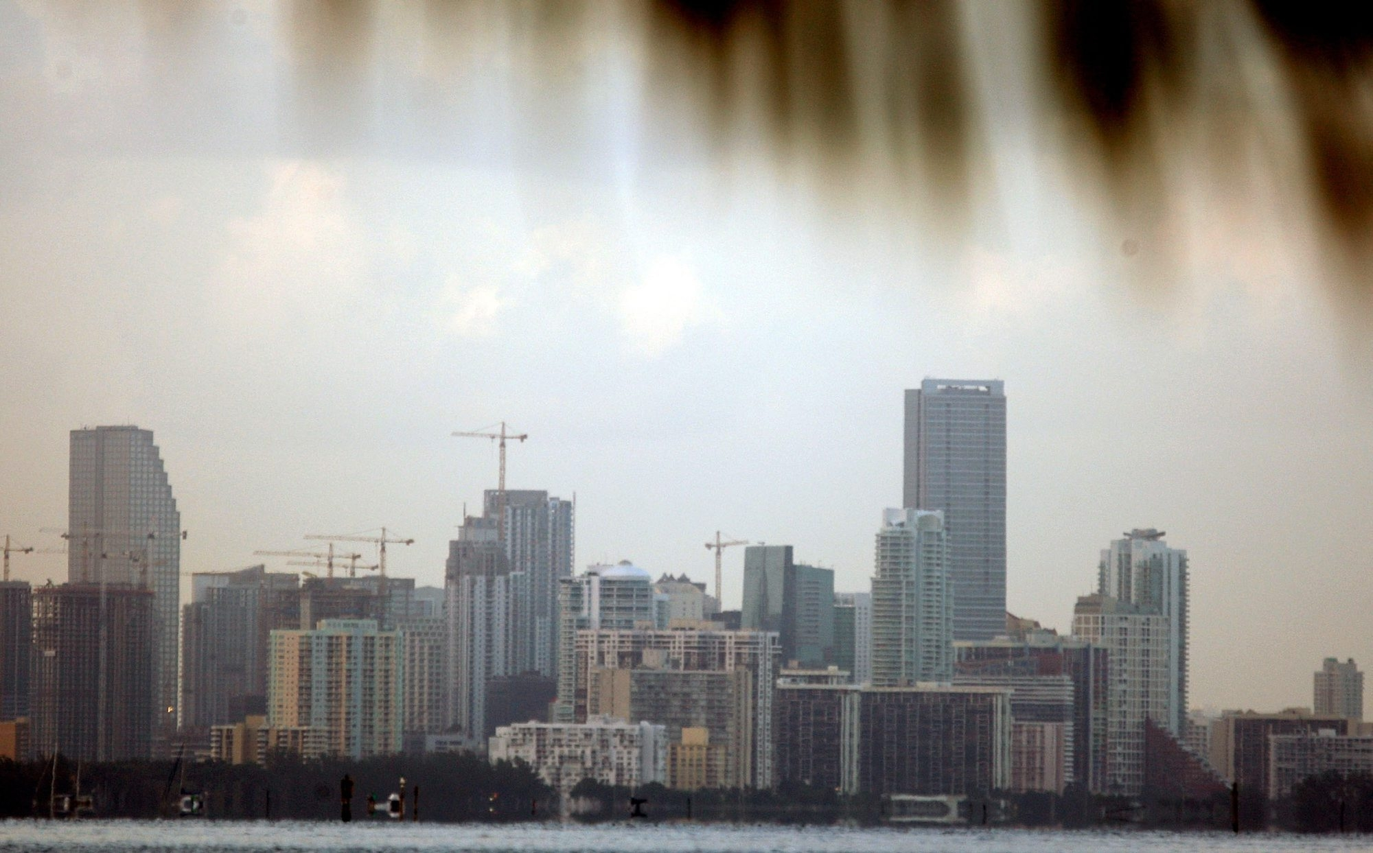 The fronds of a palm tree frame the city of Miami, Fla., as seen through a slight haze. Census estimates to be released Monday will likely show Florida and New York are narrowly separated, perhaps by as little as a few thousand people.
