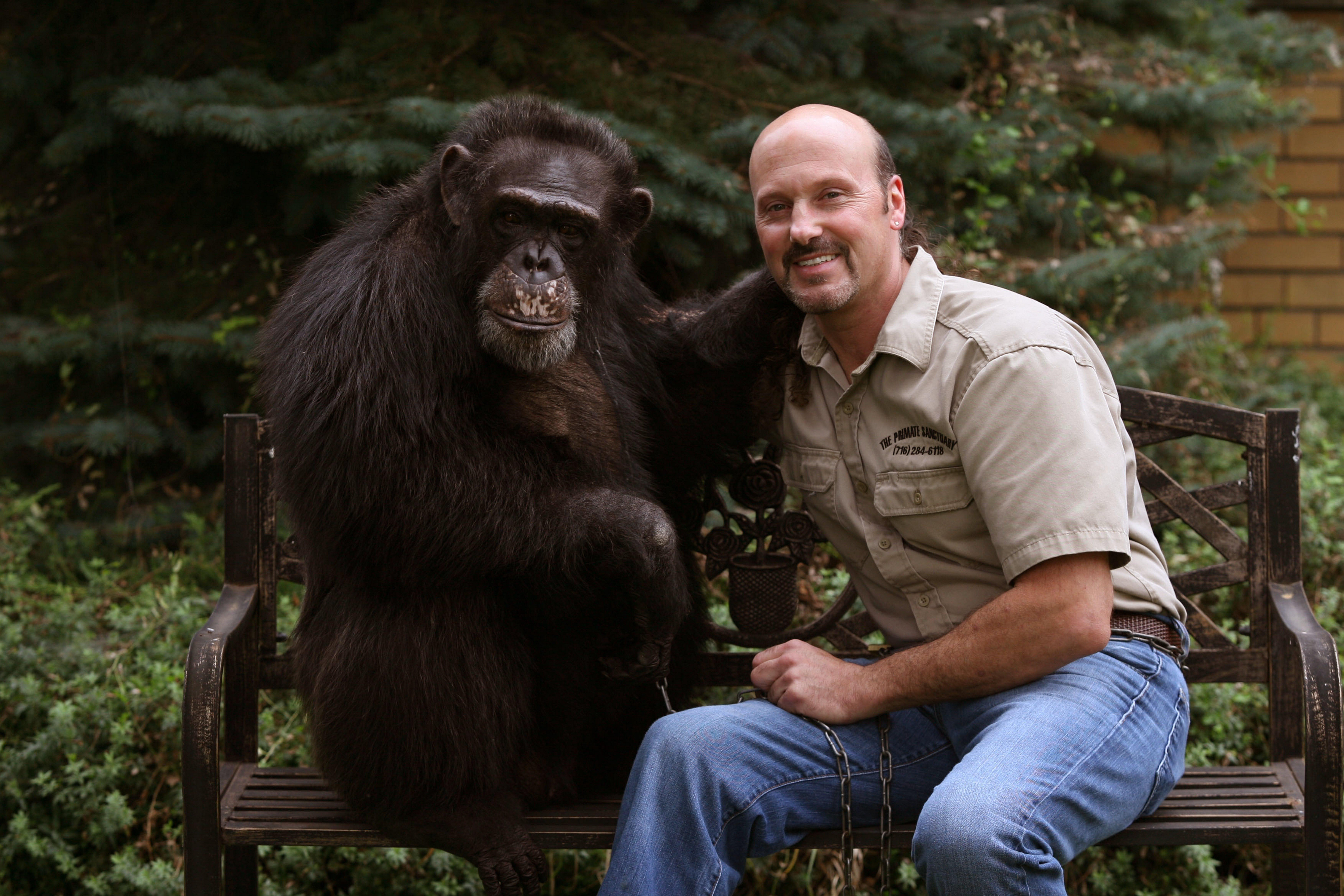 Carmen Presti, vice president of the Primate Sanctuary in Niagara Falls, is seen with Kiko, a 200-pound chimpanzee. PHOTO BY CHARLES LEWIS