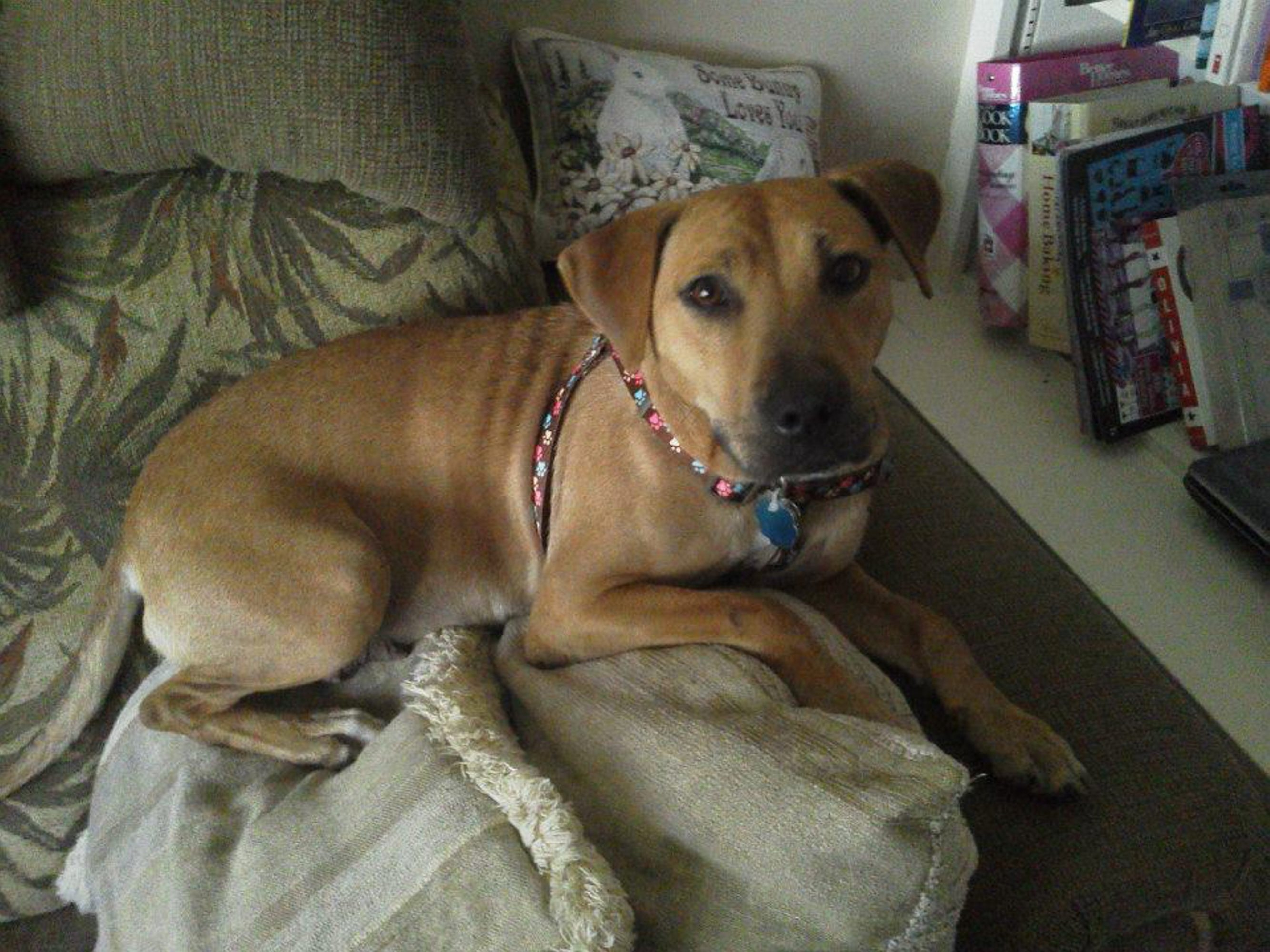 Faith, who was nearly euthanized, found a loving home and led four women to begin an animal rescue group.