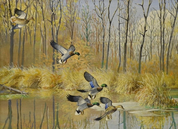 Work by wildlife artist Robert Hines is exhibited in the Roger Tory Peterson Institute.