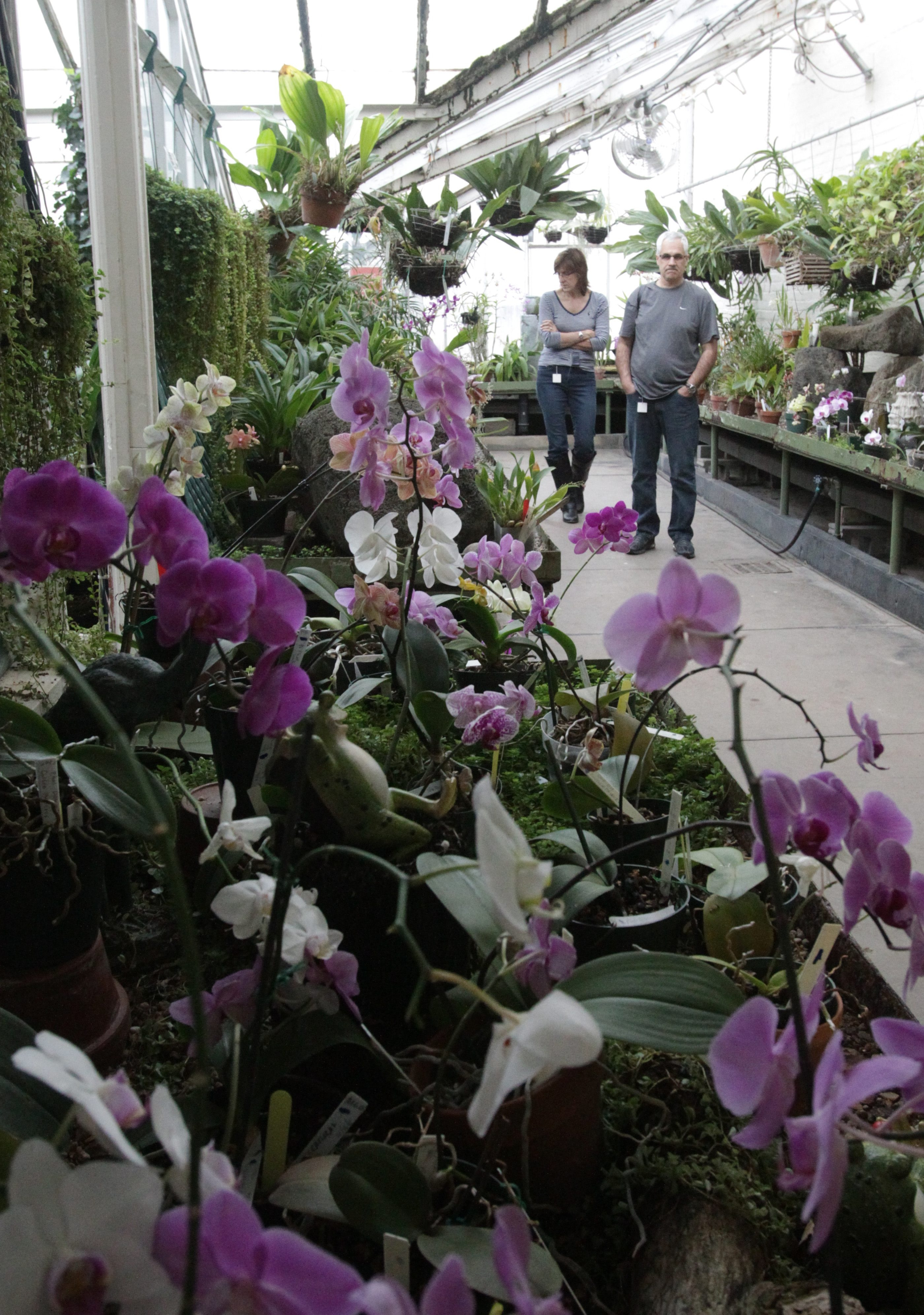 Stephanie and Richard Morgano of Long Island check out the orchids on display for the annual show on Friday.
