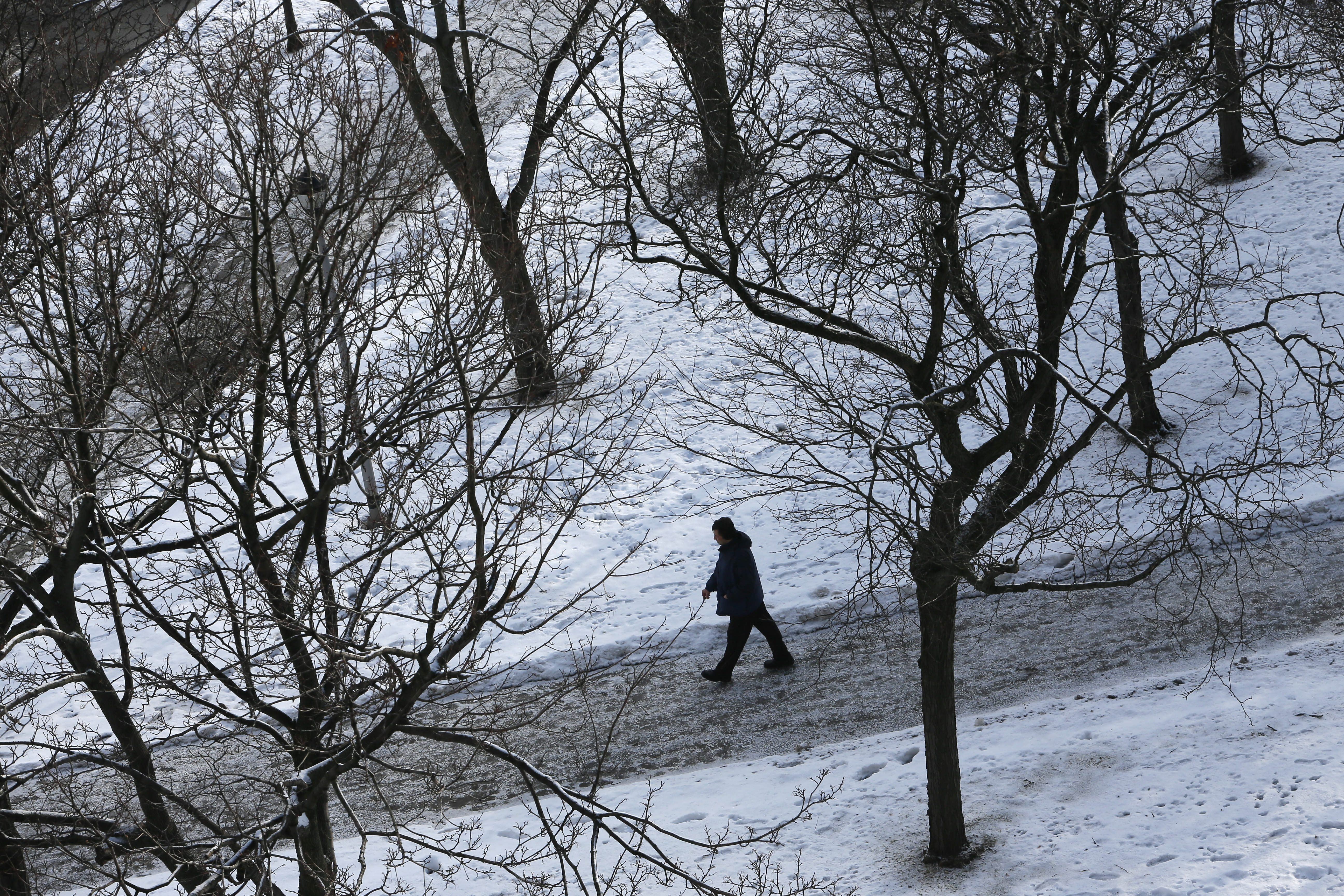 A pedestrian walks on the path through the trees in Fireman's Park on North Division Street Monday.