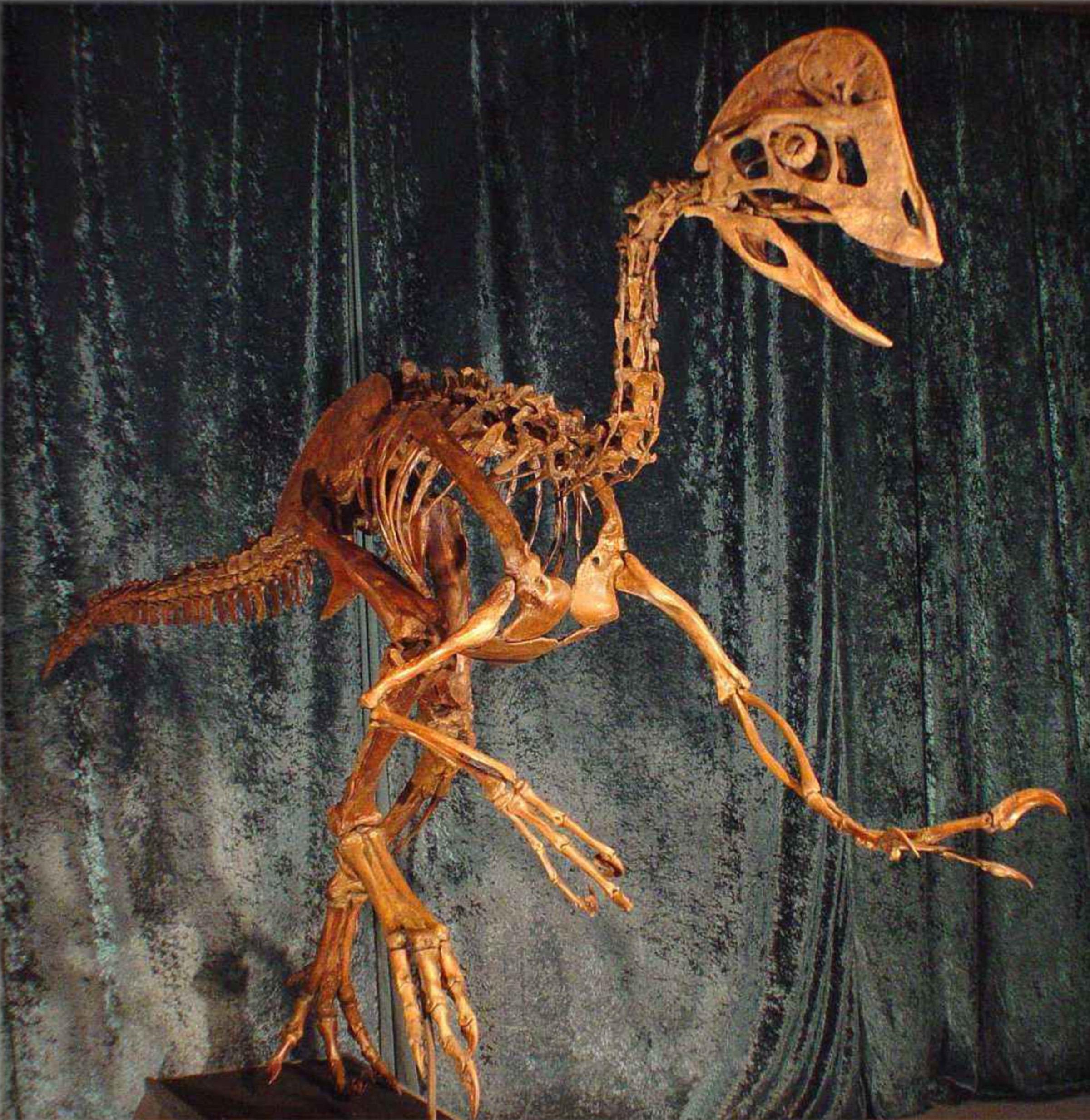 This reconstruction depicts the Anzu wyliei, a birdlike dinosaur that roamed western North America 66 million years ago.