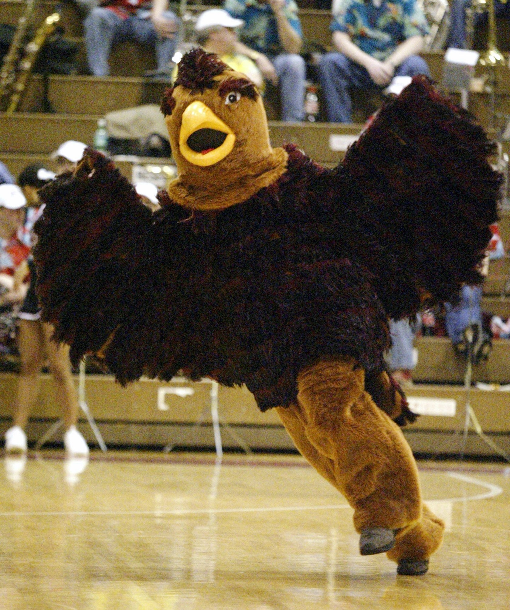 """The St. Joseph's mascot, """"The Hawk,"""" is always on the move, continuously flapping his wings while he's on the court."""