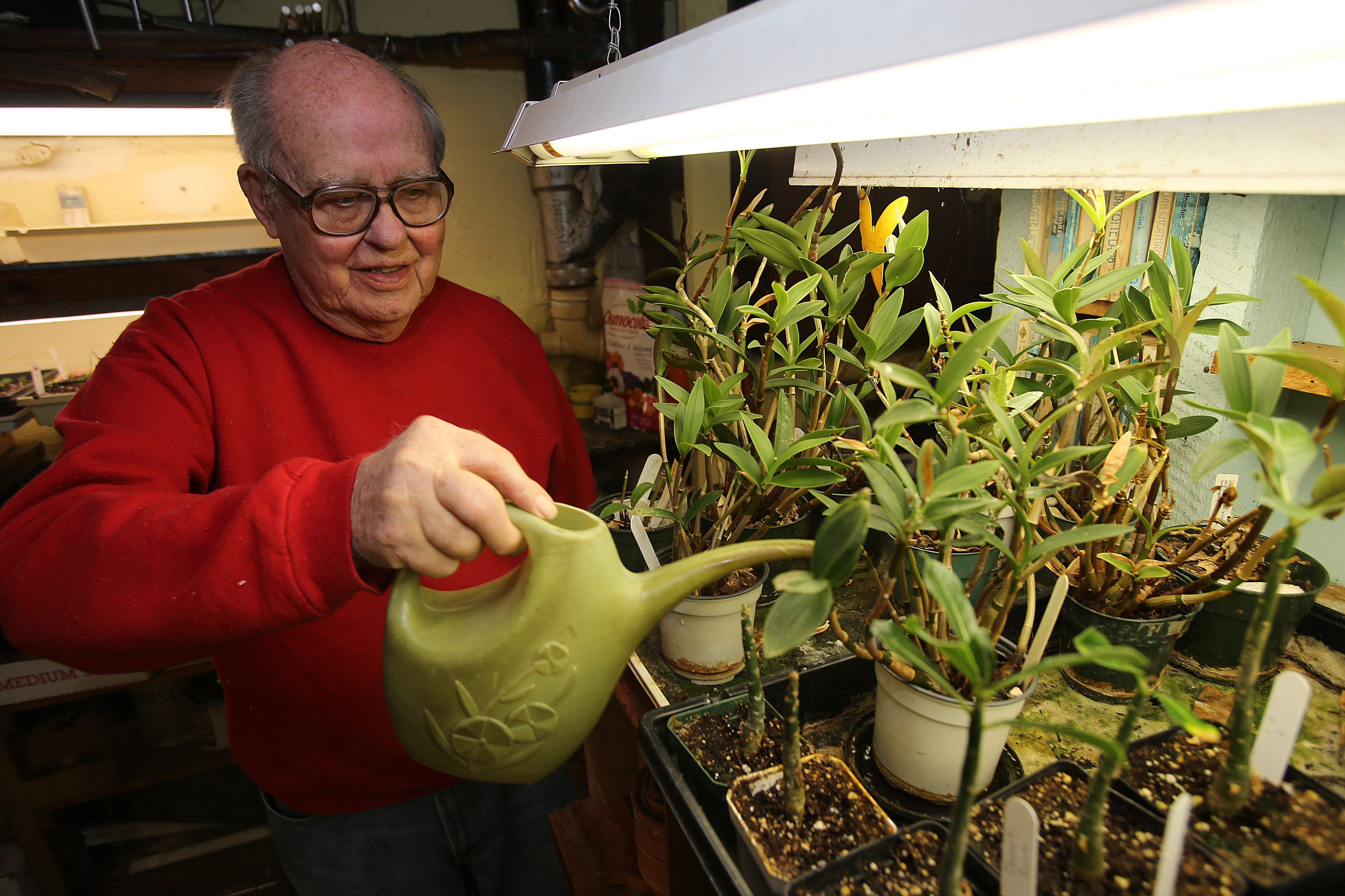 Master gardner Fran Evans tends to seedlings in the basement of his Hamburg home late last month. Evans has been planting and harvesting since he was a boy, but got deeply into gardening when he left his career as a chemist.