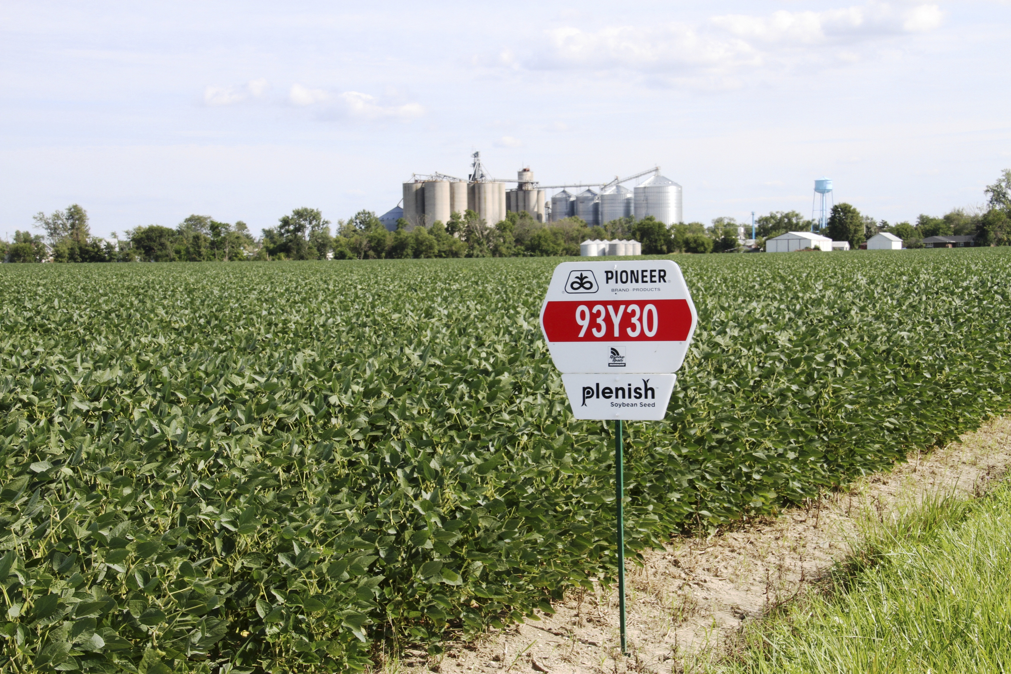 DuPont Pioneer Plenish grows soybeans in a field near Napoleon, Ohio, last summer. Efforts to eliminate trans fats in food could make marketing genetically modified soybeans easier.