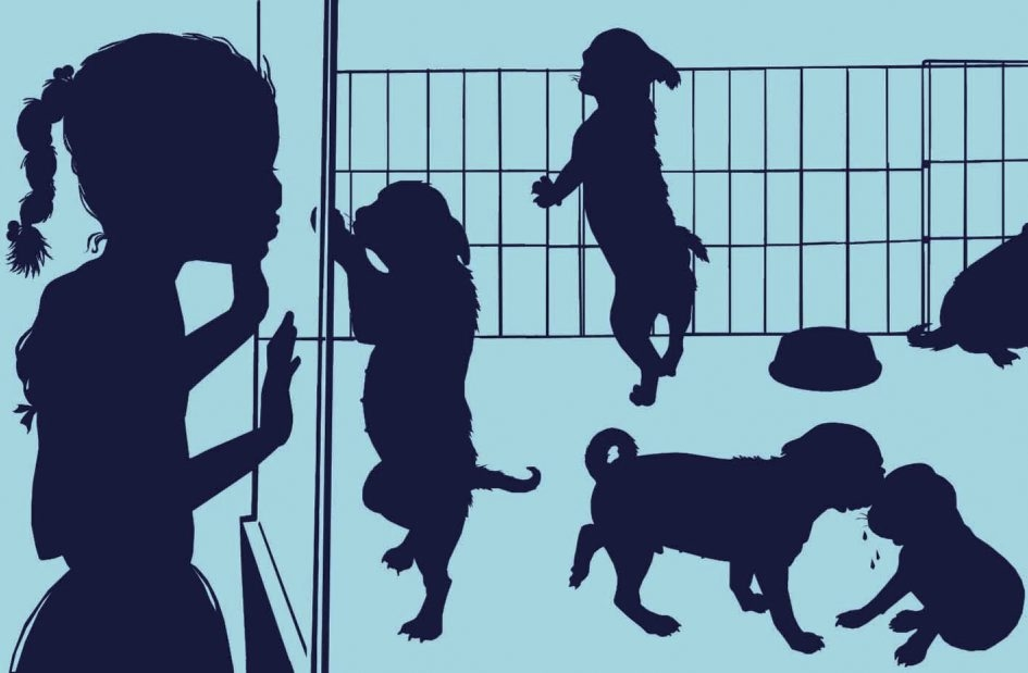 Adopting a dog can allay the loneliness of old age, but it is not a decision to take lightly as it brings on a host of responsibilities and expenses.