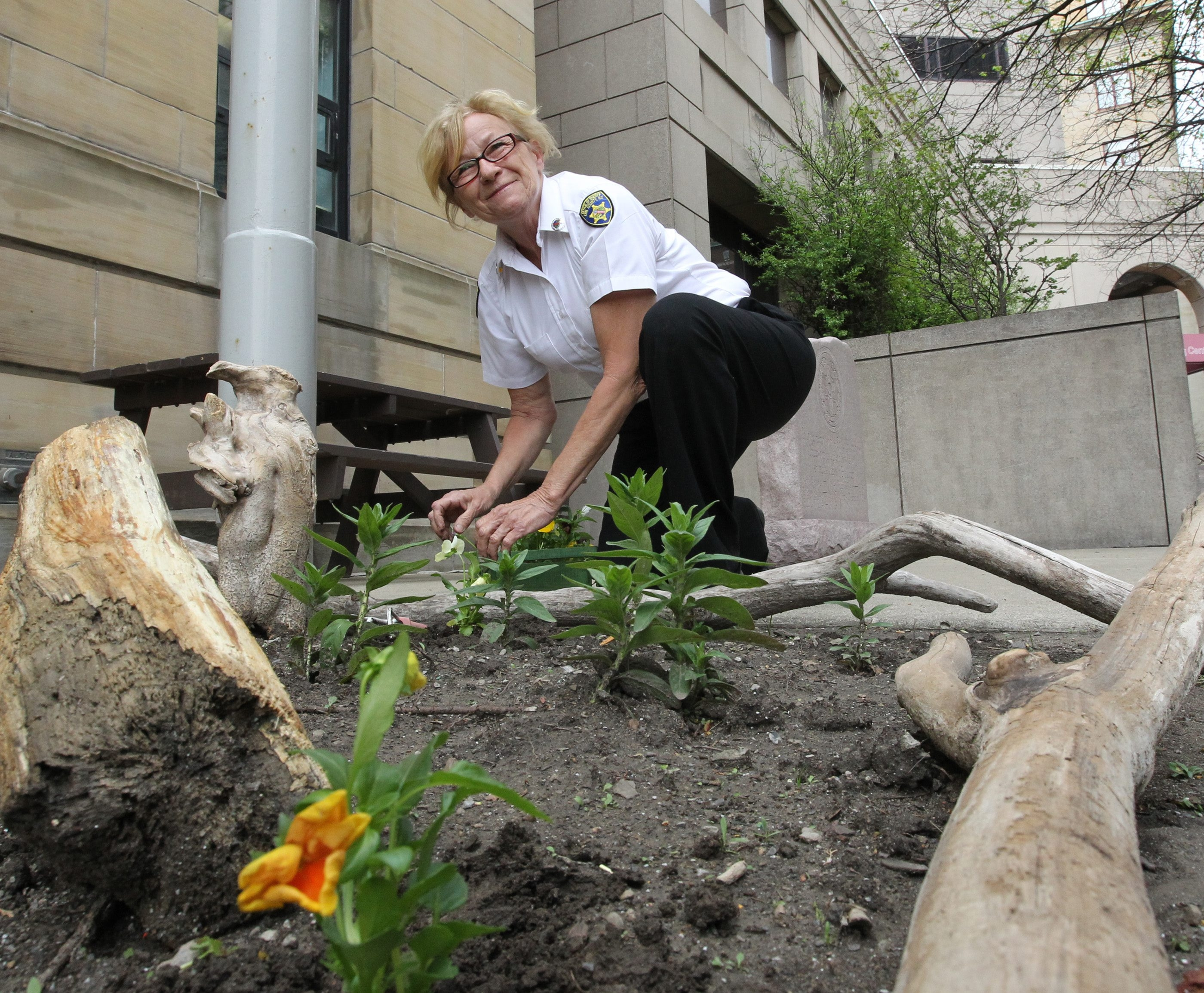 Erie County Sheriff's Office receptionist Susie Wilke Zagorski is beautifying what once were patches of dirt in front of sheriff's administrative offices on Delaware Avenue  with flowers.