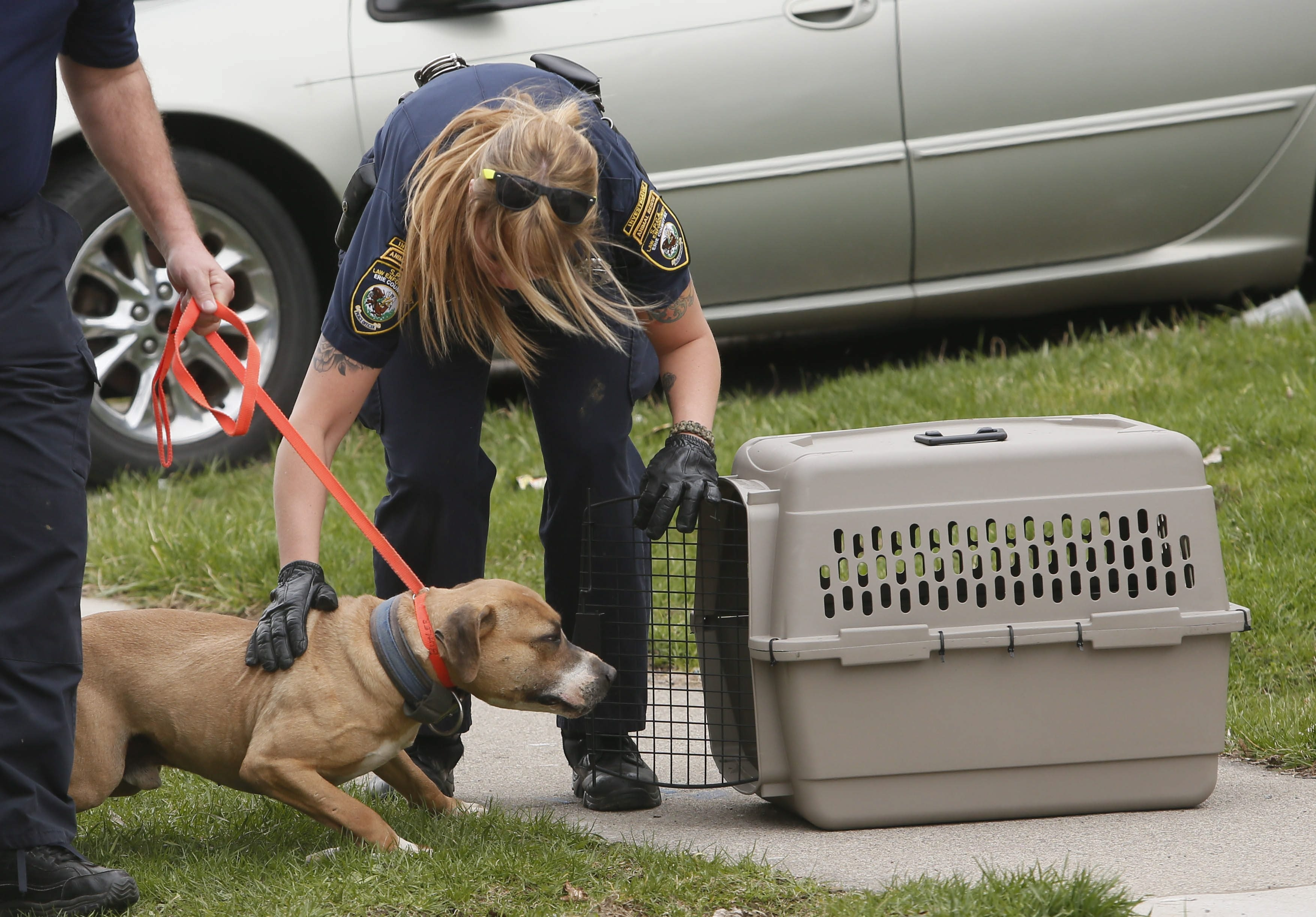 Officers from the SPCA load a dog into a crate outside of 269 Loring Ave., one of seven houses raided by Buffalo Police and SPCA as part of an investigation into an alleged dogfighting ring, Friday, April 25, 2014.  (Derek Gee/Buffalo News)