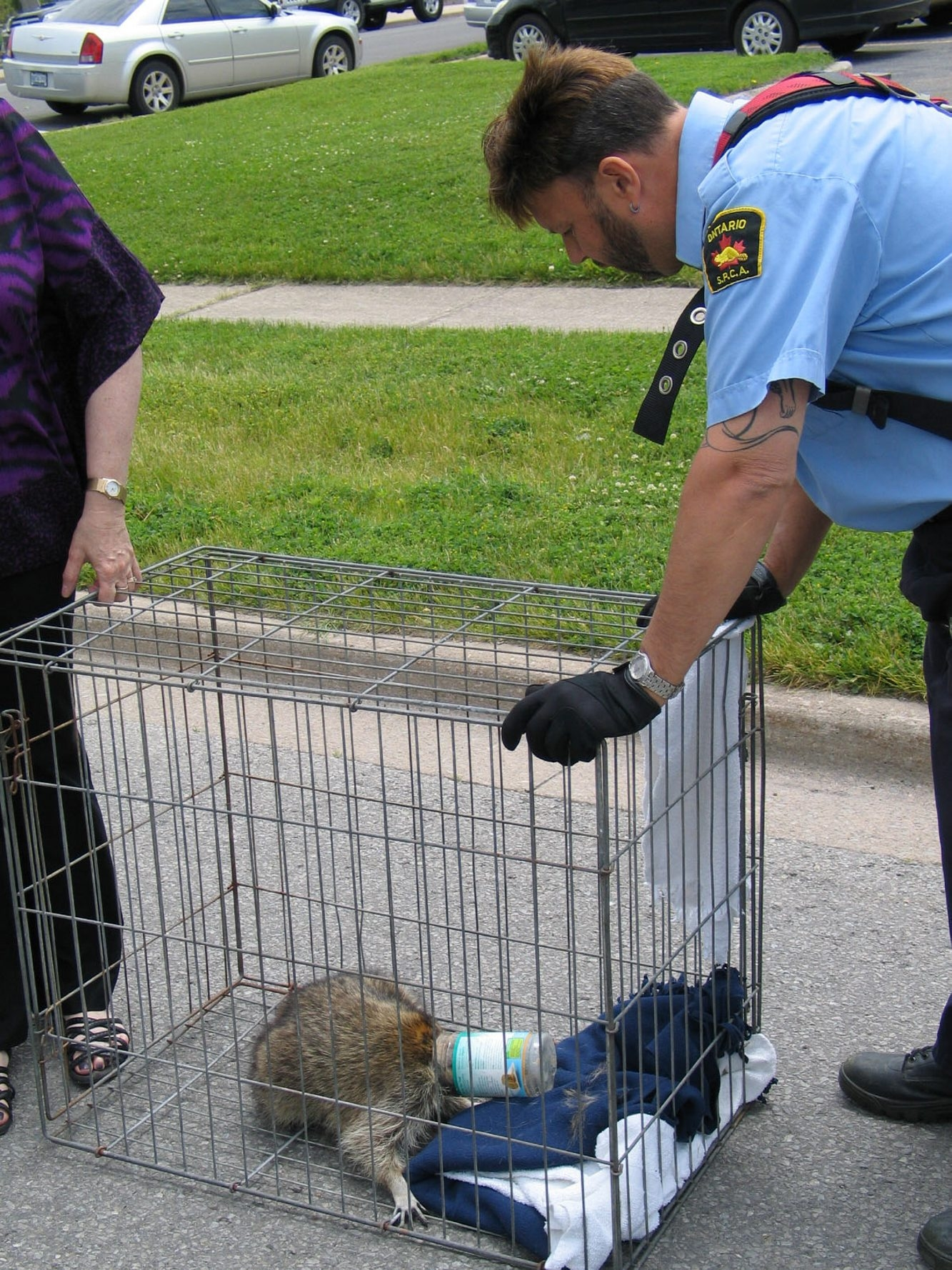The Fort Erie, Ont., Fire Department and SPCA rescued this raccoon that had its head stuck in a peanut butter jar.