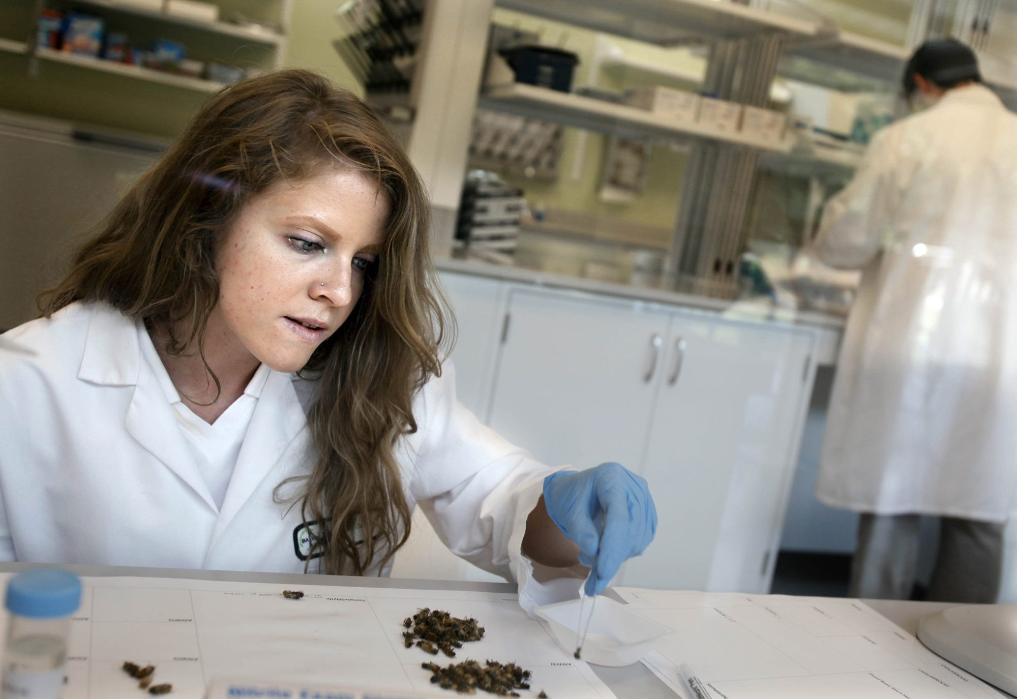 Jen Williams, research assistant, works in the lab at the $2.4 million Bayer CropScience North American Bee Care Center in Raleigh, N.C. Bayer manufactures insecticides that some critics say harm bees.