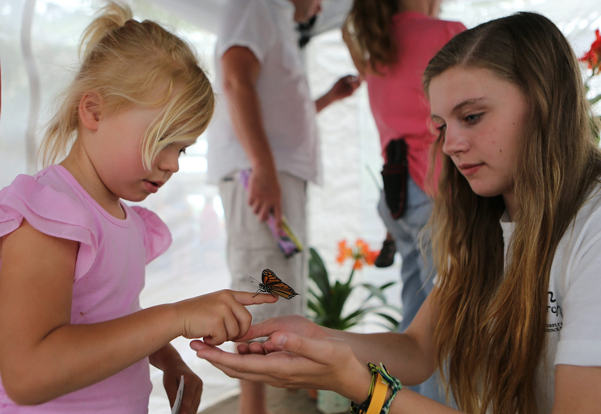 Morgan Vozga, a butterfly wrangler from the Monarch butterfly Farm in Clarence, right, helps Kendall Griffey of West Seneca hold a Monarch butterfly at the Buffalo and Erie County Botanical Gardens.