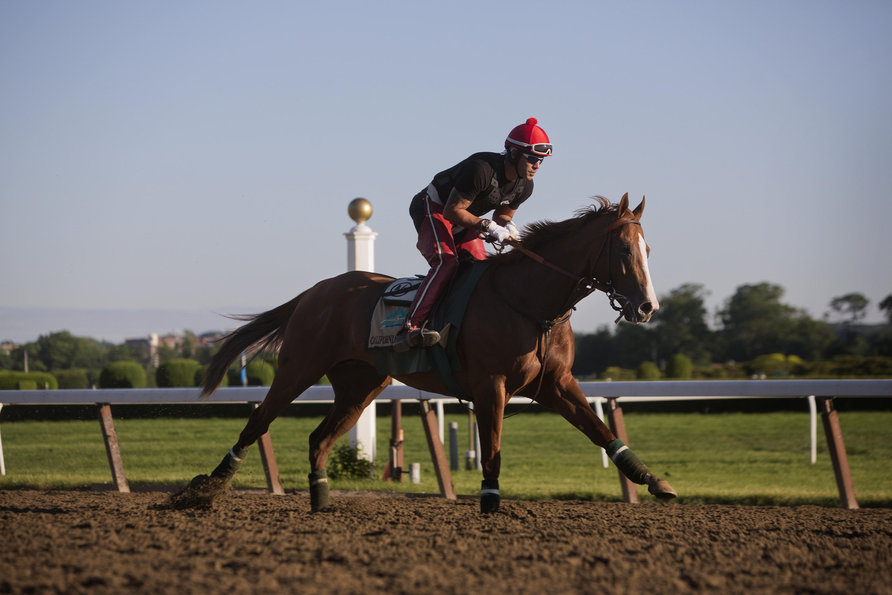 California Chrome and exercise rider Willie Delgado get their morning workout in Friday at Belmont Park. Chrome tries to become the first Triple Crown winner since Affirmed in 1978 during tonight's Belmont Stakes race. (Victor J. Blue/The New York Times)