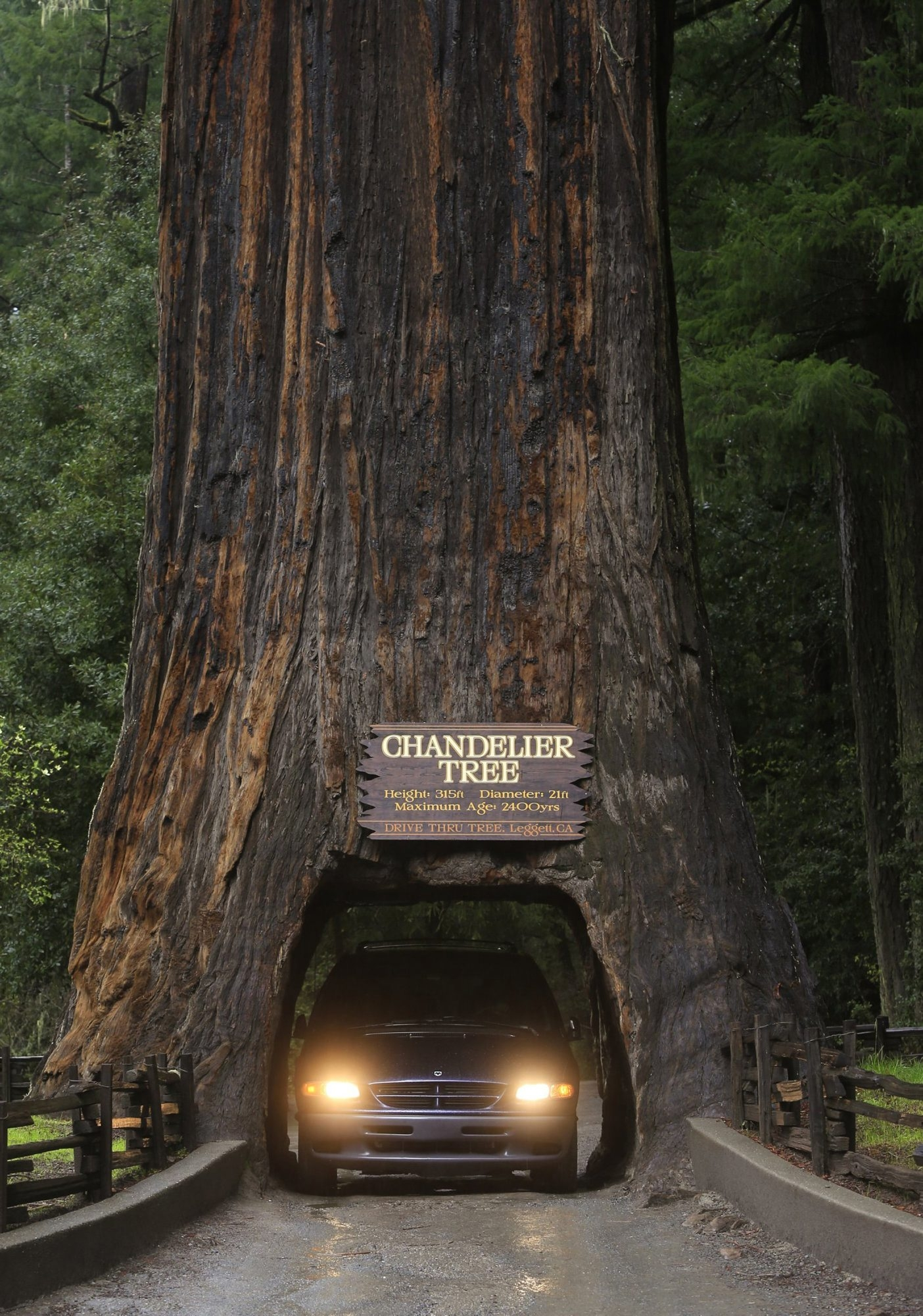 Motorists drive through the famous Chandelier Tree, a redwood in Leggett, Calif., about 180 miles north of San Francisco. Several state parks in the area offer access to miles of land filled with the tallest trees on Earth.  Los Angeles Times