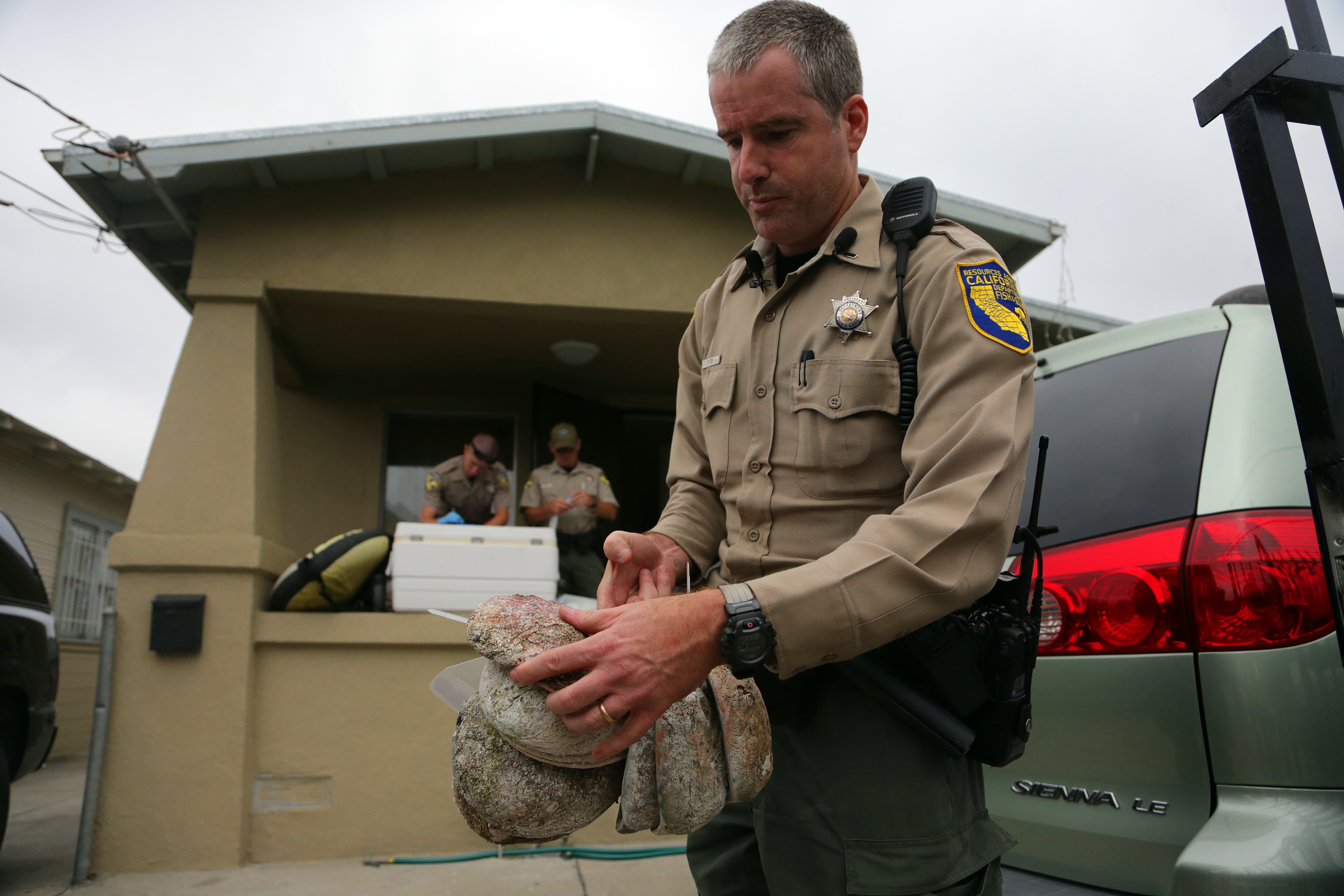 """Above, Patrick Foy of the California Department of Fish and Wildlife examines abalone shells seized from suspected poachers in Oakland. Wardens from across the state raided 14 Bay Area homes, targeting a poaching ring driven by the mollusk's status as a delicacy in many Asian cultures. At left, Dwayne Dinucci's vanity plate declares his love for """"popping abalone,"""" in Union City."""