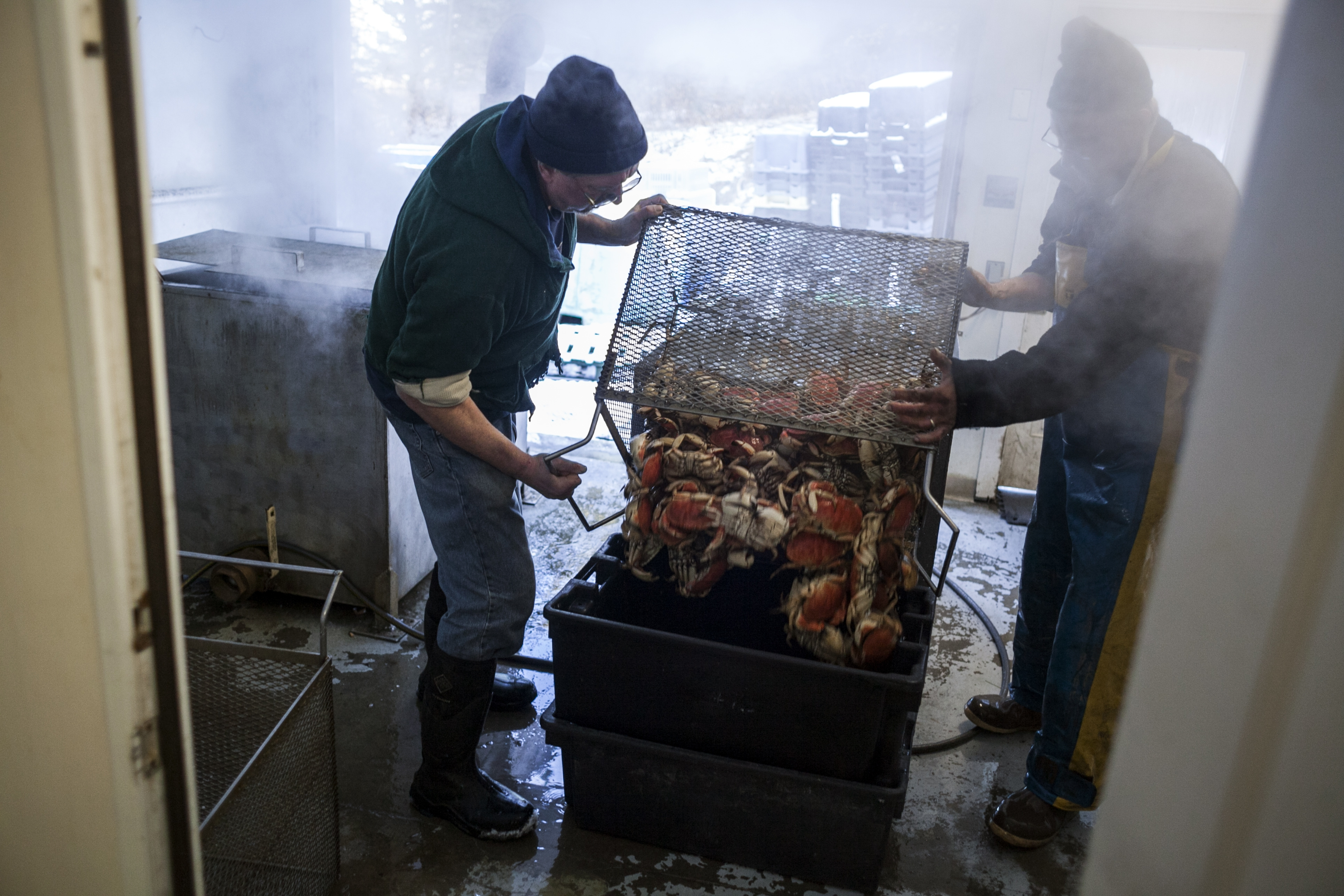 Glen Libby, a founder of Fresh Catch,a fisherman-owned seafood processing business in  Port Clyde, Maine, prepares a batch of crabs.