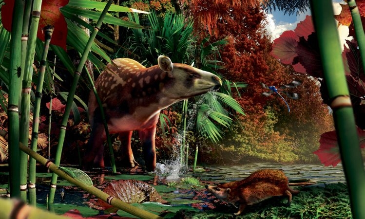 An artist's rendering of a tiny hedgehog, lower right, that lived about 52 million years ago.