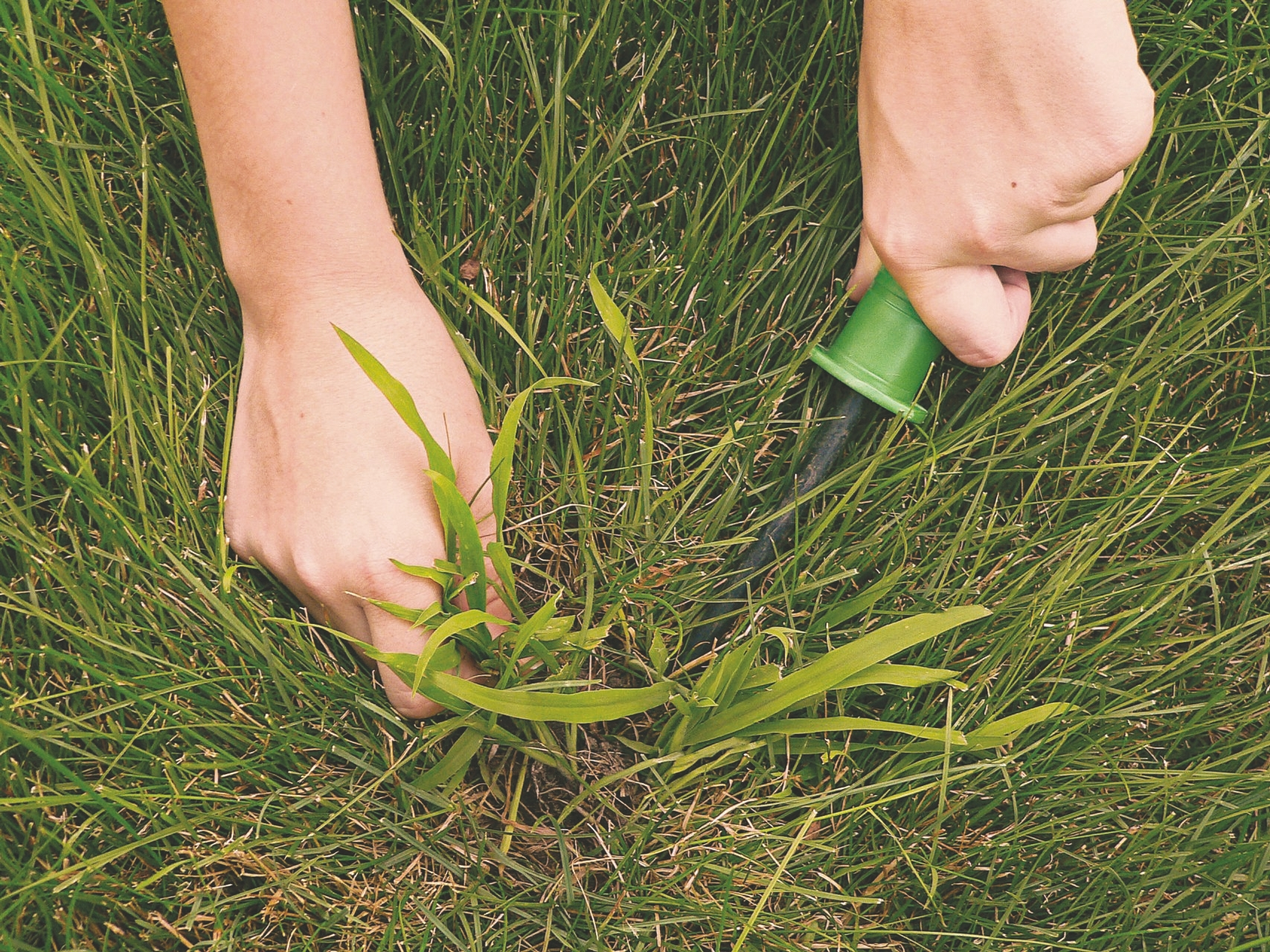 To help contain crabgrass, Consumer Reports suggests applying corn gluten meal, a natural alternative to chemical herbicide, in early spring.