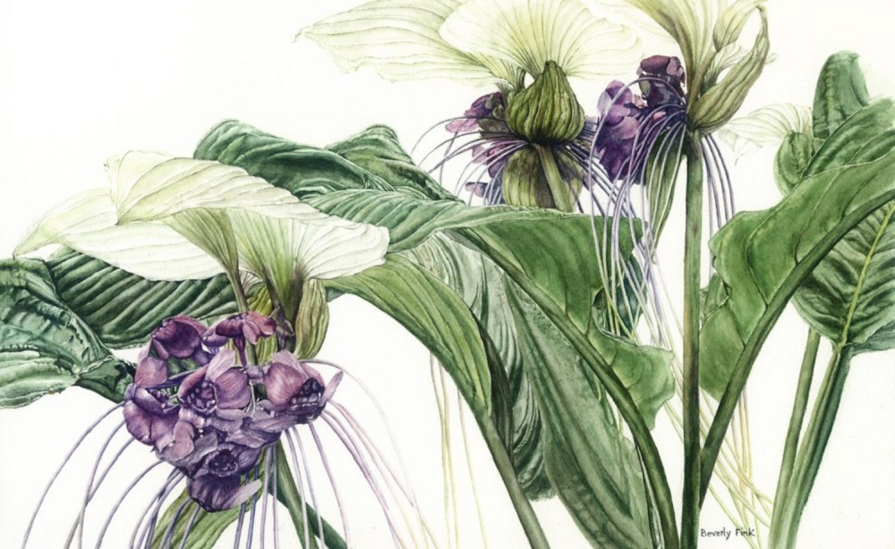 """""""Bat Flower"""" by Beverly Fink is one of the pieces that will be featured at the Kenan Center House Gallery."""