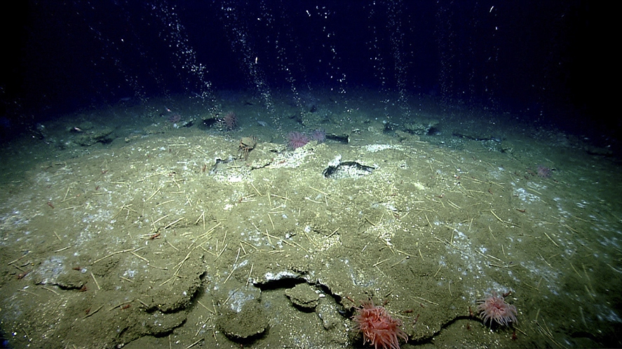 Methane gas bubbles from the seafloor at a depth of almost 1,400 feet off the East Coast where the continental shelf meets the Atlantic. Such seepage has been found at 570 sites.