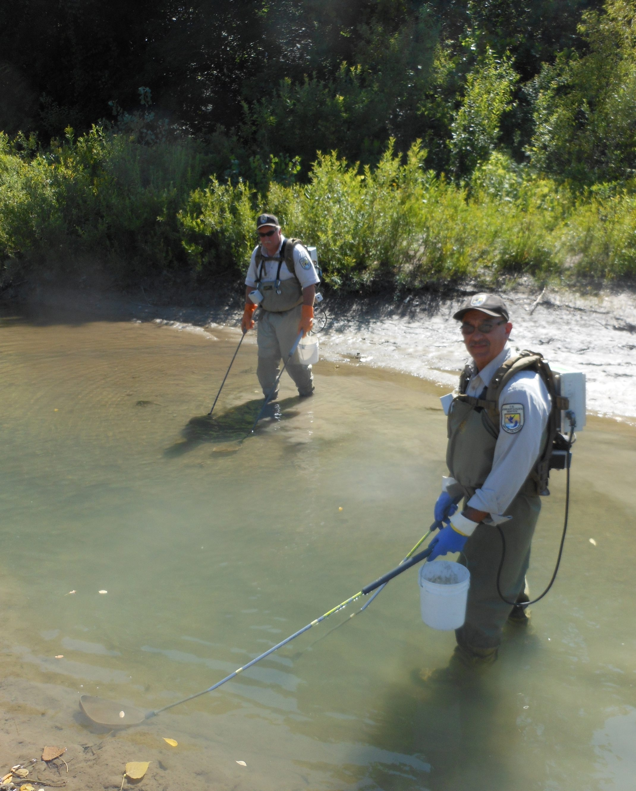 Outdoors Page Photo (lead column) for 8/24/14 for will elliott – [Caption: Federal wildlife biologists Dave Keffer and Ed LaFuente survey Cattaraugus Creek waters for sea lamprey larval presence]