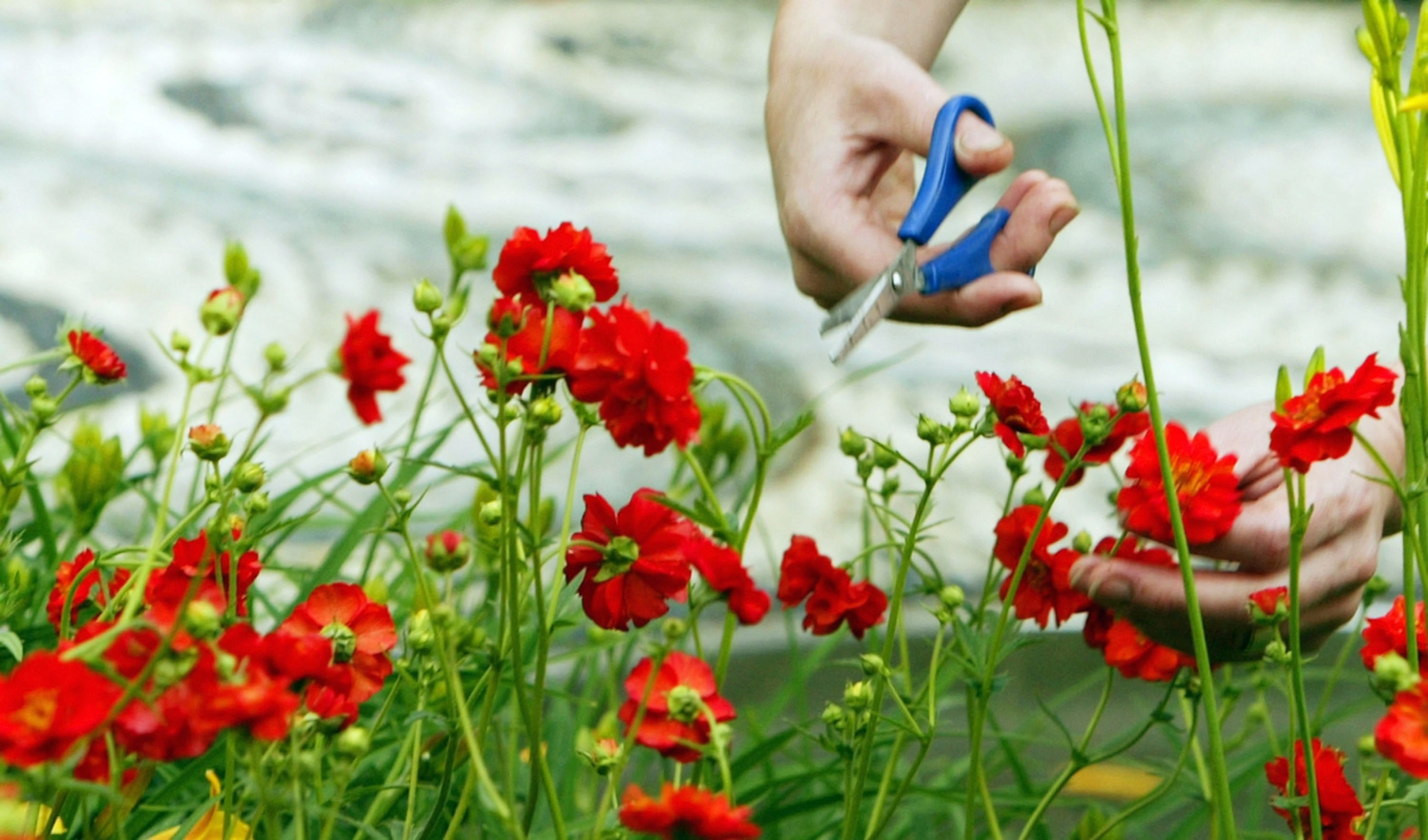 Dig in:  There are many kinds of gardeners, with vast differences in what they want, how much they want to garden and what they care to know.