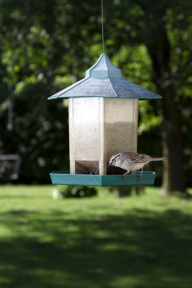Backyard bird feeders are just one of the ways gardeners can provide for the birds.