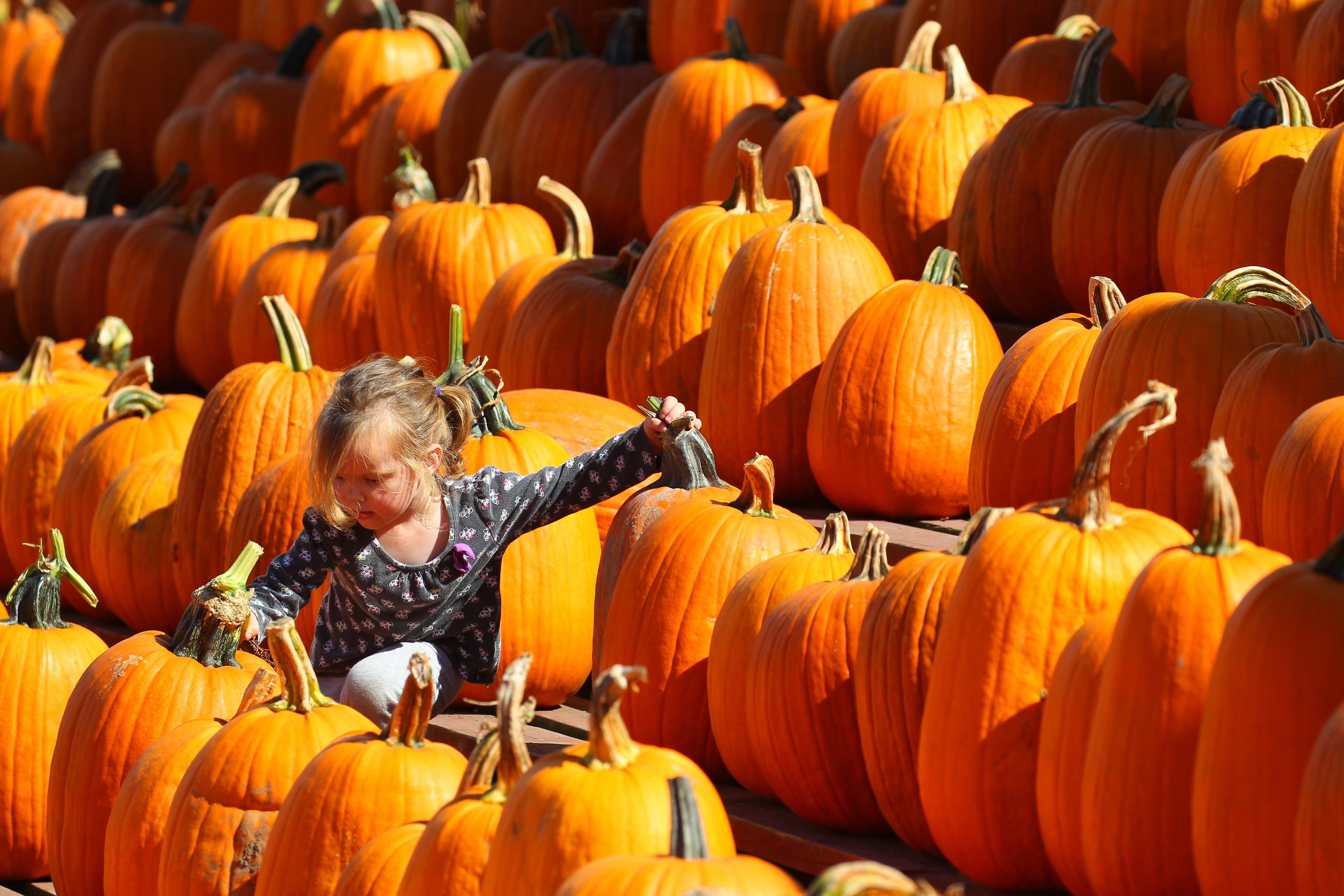 Madison Nelson climbs through a mountain of pumpkins at 20th annual farm festivities at the Great Pumpkin Farm in Clarence on Sunday. See a photo gallery at BuffaloNews.com.
