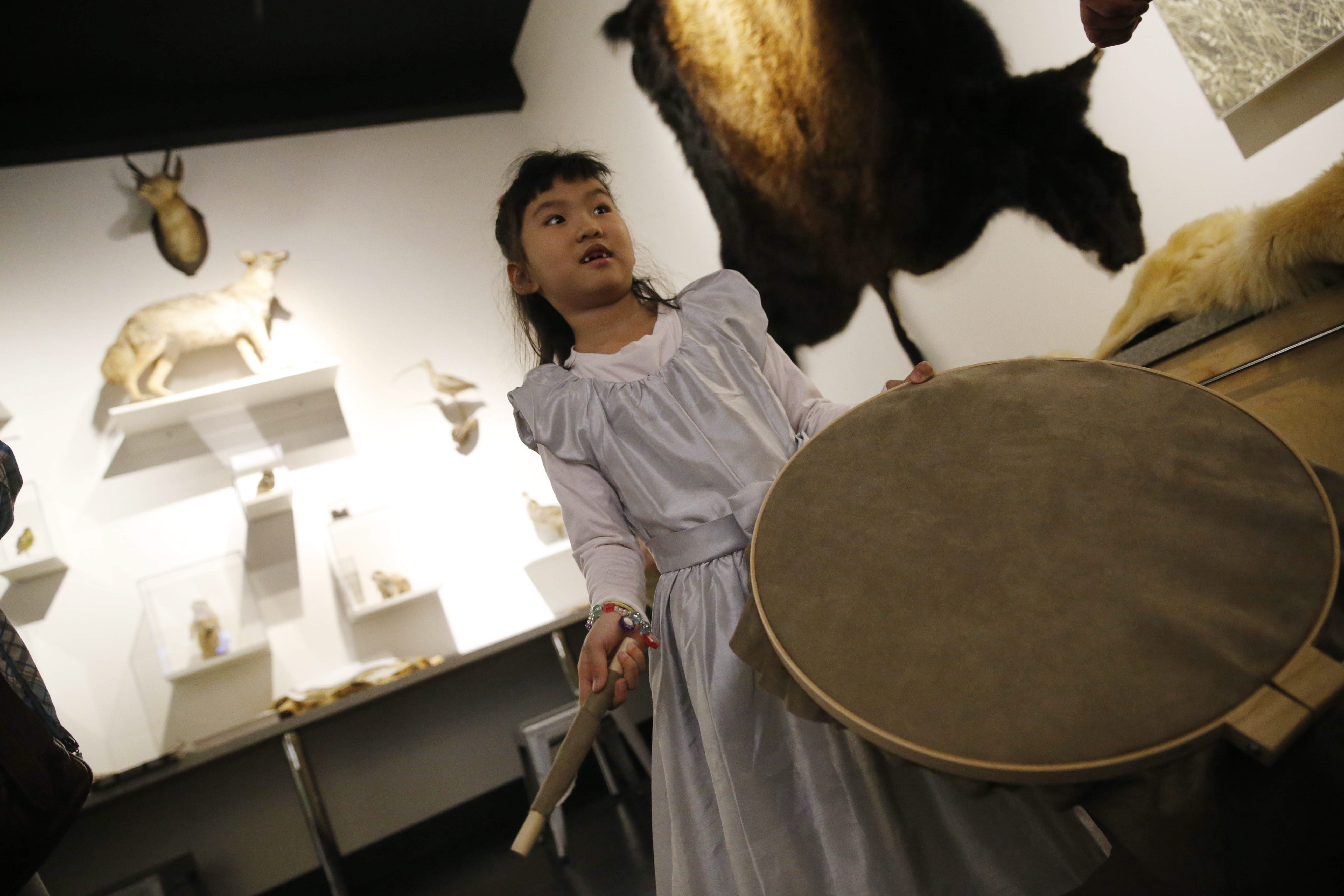Haojia Weng, 6, of Buffalo tries out an Inuit drum Saturday during the Polar Activities educational programming in the new biodiversity exhibit at the Buffalo Museum of Science.