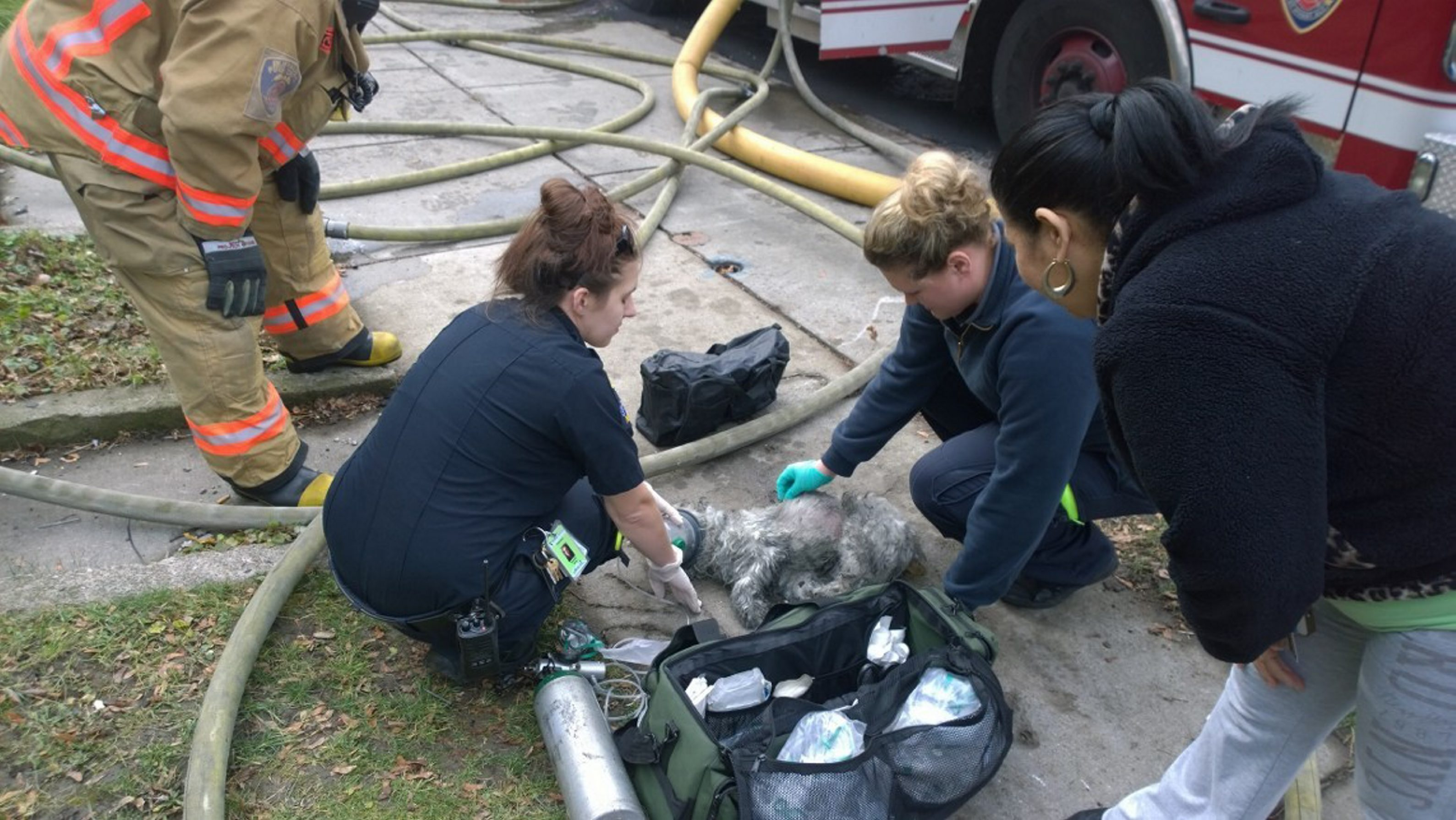 A dog rescued from a house fire on Herkimer Street is given oxygen at the scene on Dec. 10. (David F. Kazmierczak/Special to The News)