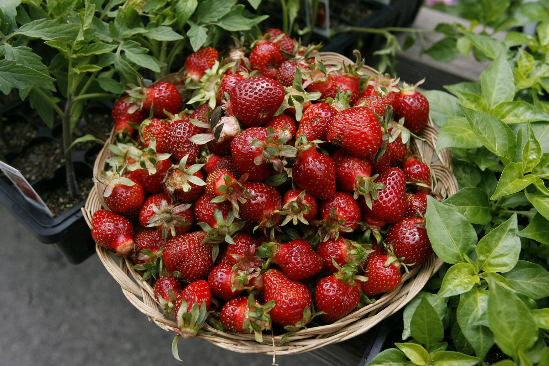 Strawberries were swapped for french fries on the Silver Diner children's menu and became a big hit. (Buffalo News file photo)