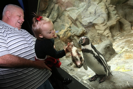 100 Things: Visit the Aquarium of Niagara