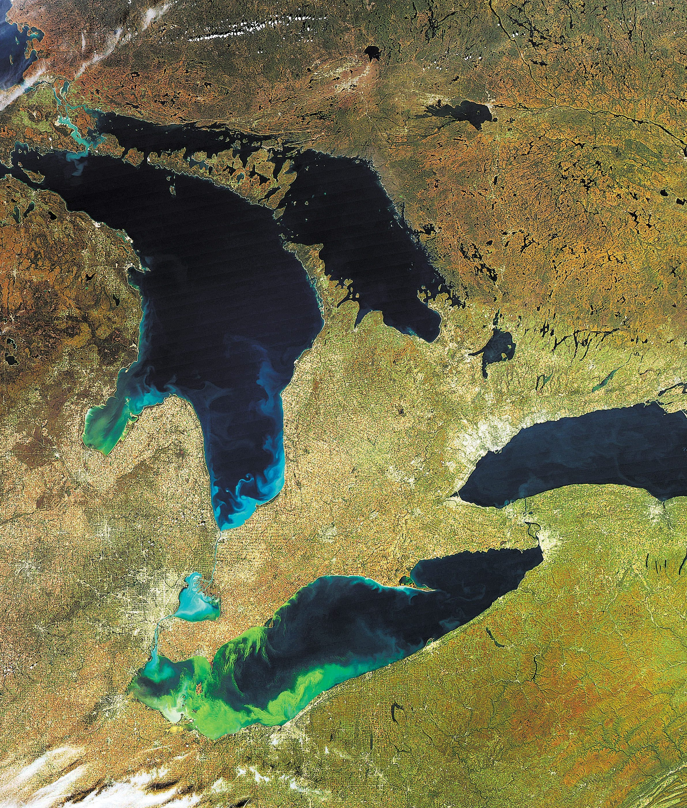 """Then-record Lake Erie algal bloom in 2011, seen in satellite image, led to oxygen-depleted """"dead zones"""" that endangered aquatic life."""