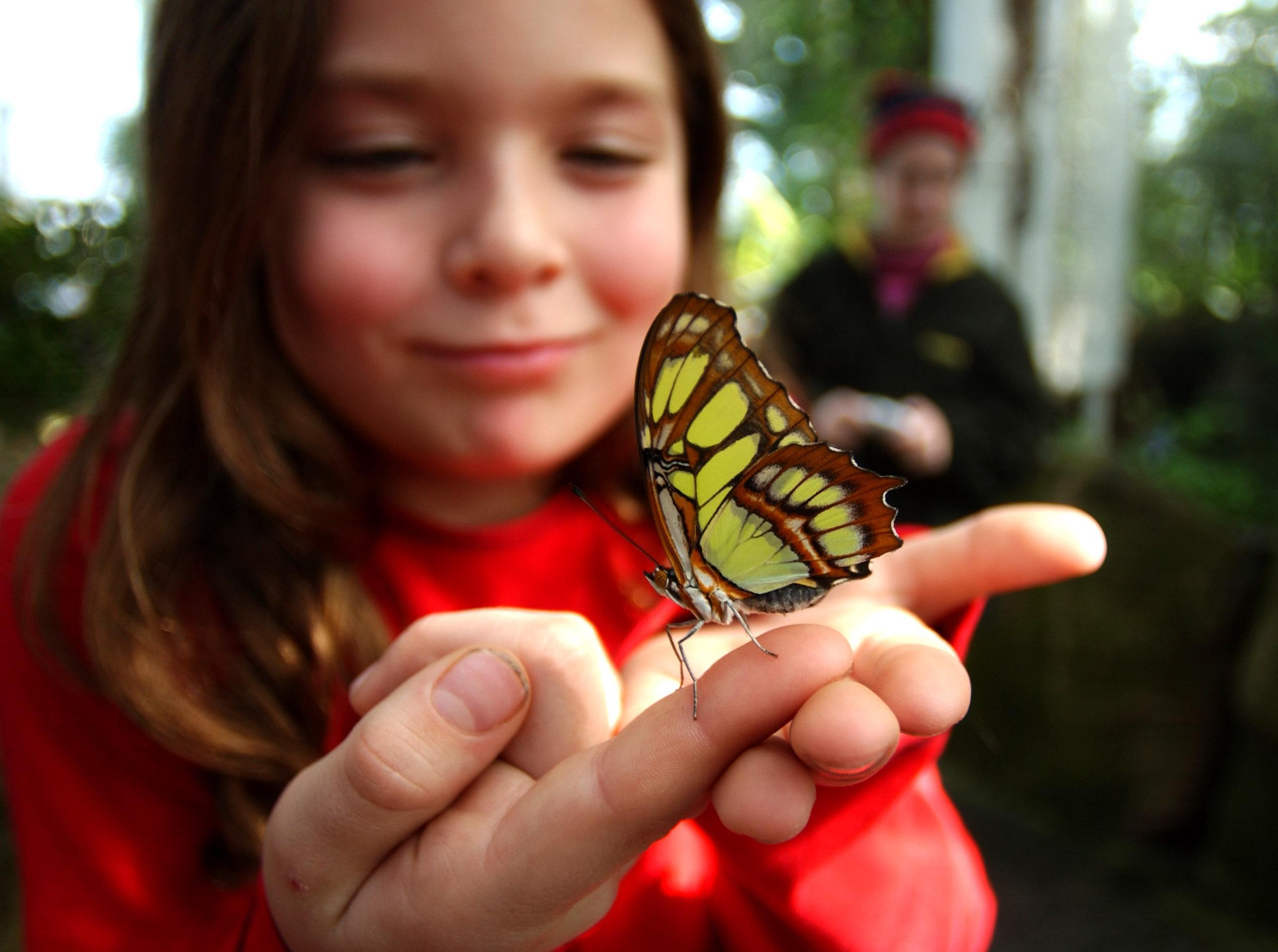 Ripley Tordoff of Buffalo holds a butterfly at the Niagara Parks Commission Butterfly Conservatory in Niagara Falls, Ont. (Robert Kirkham/Buffalo News file photo)