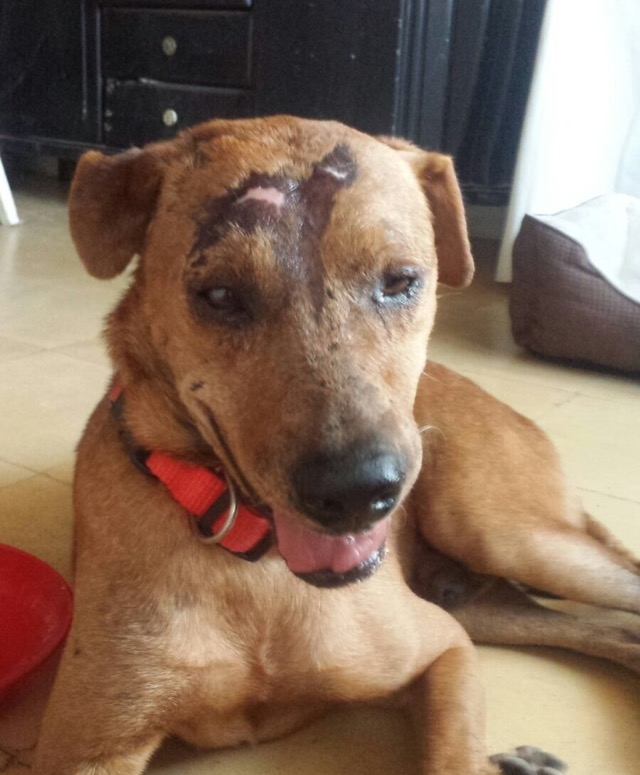A recent picture of Manny shows the injuries he suffered in Colombia have healed to a great extent.