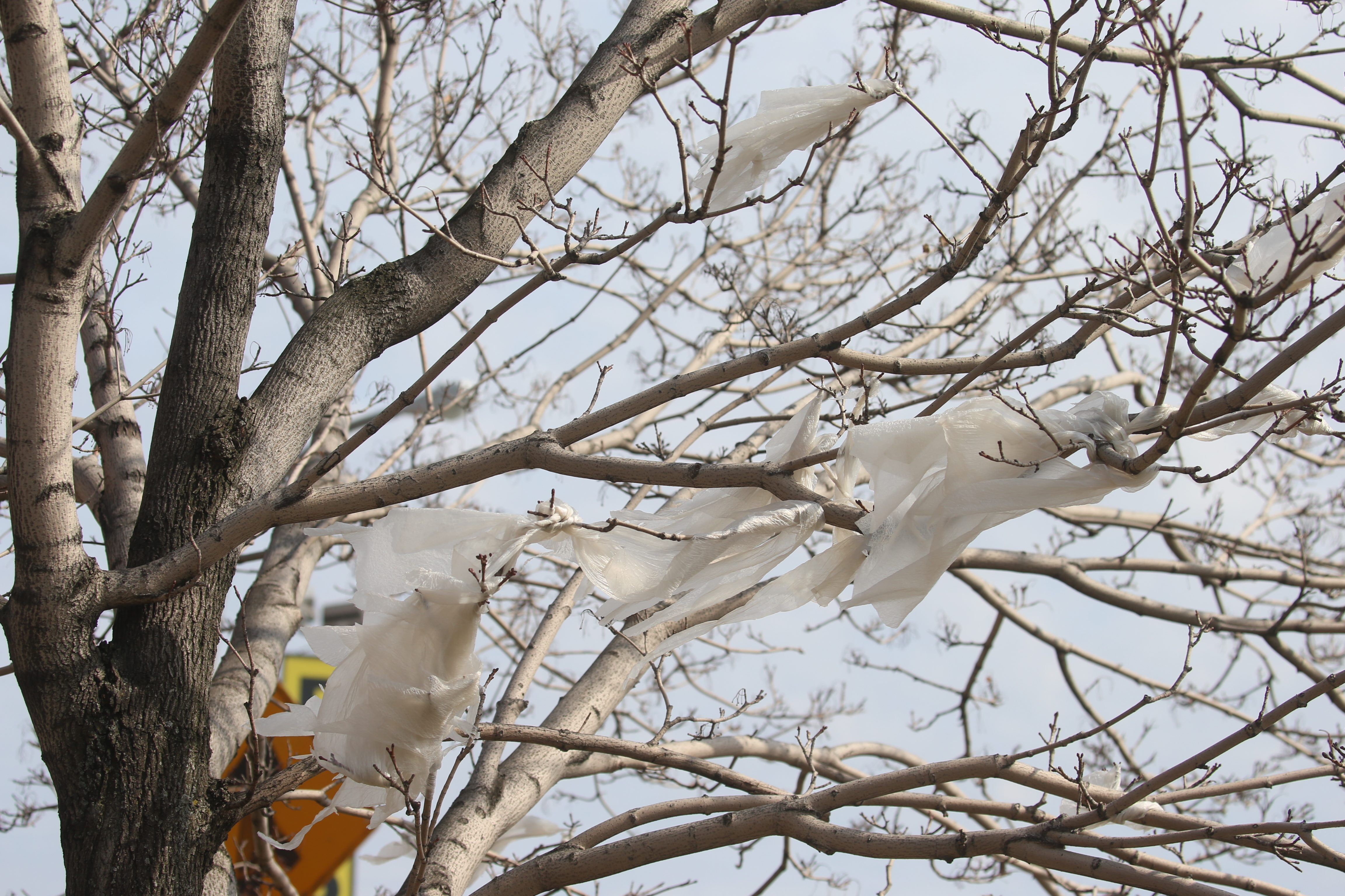 Part of the environmental impact of plastic bags was evident Wednesday as some of them were tangled in a tree on Seneca Street by I-190. (John Hickey/Buffalo News)