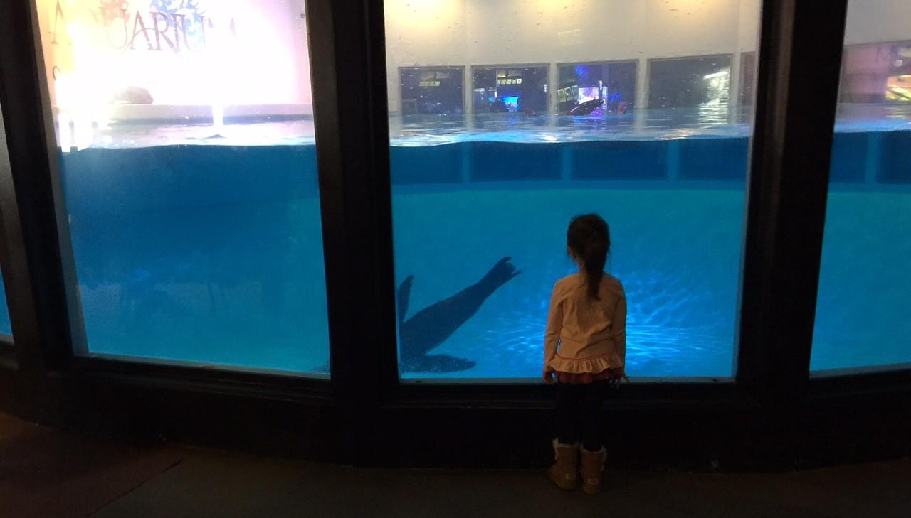 The Aquarium of Niagara will host 'Penguin Days.'