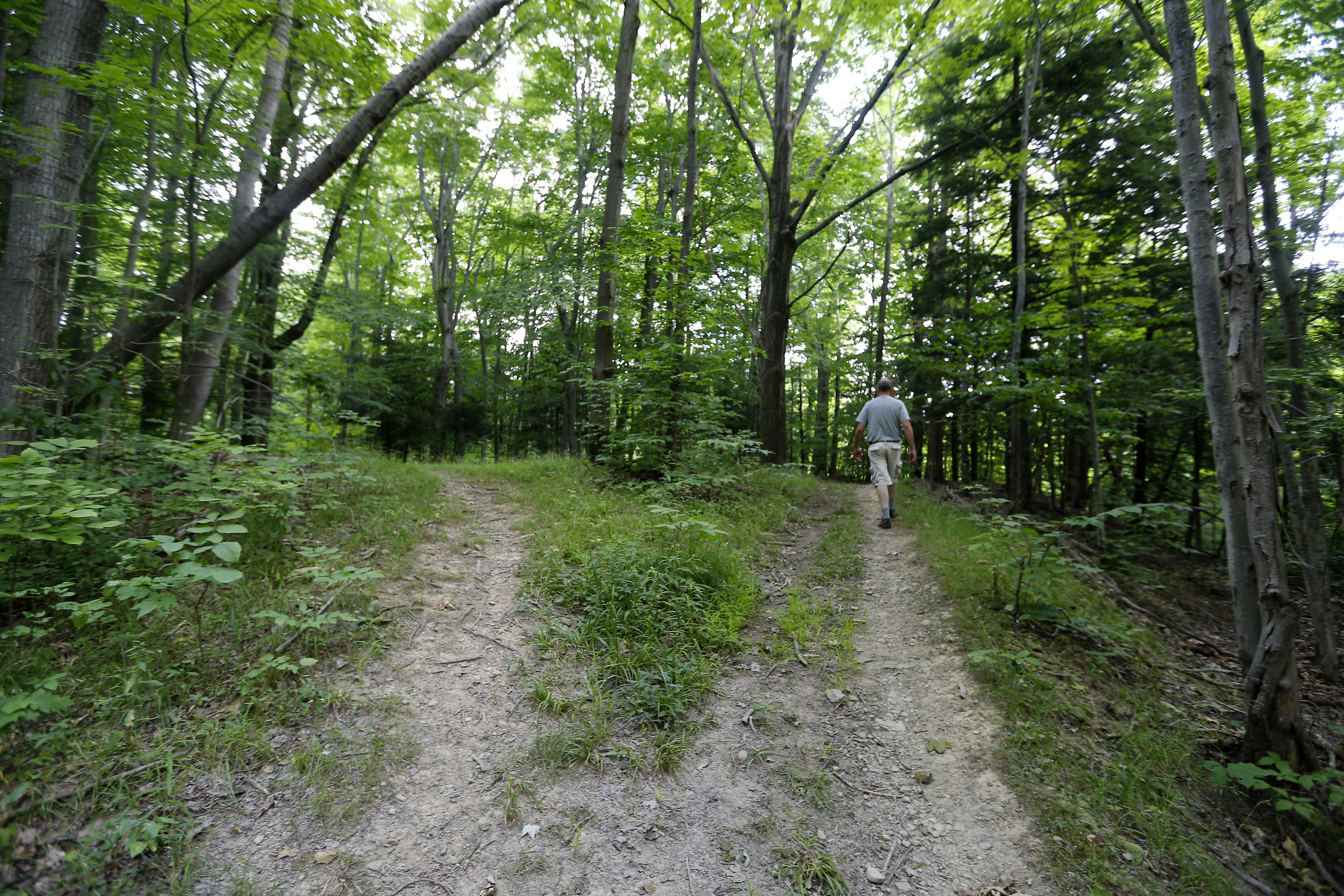A hiking trail on land where the Western New York Land Conservancy is trying to preserve a 57-acre parcel connected to Jackson Falls in Aurora. (Mark Mulville/Buffalo News)