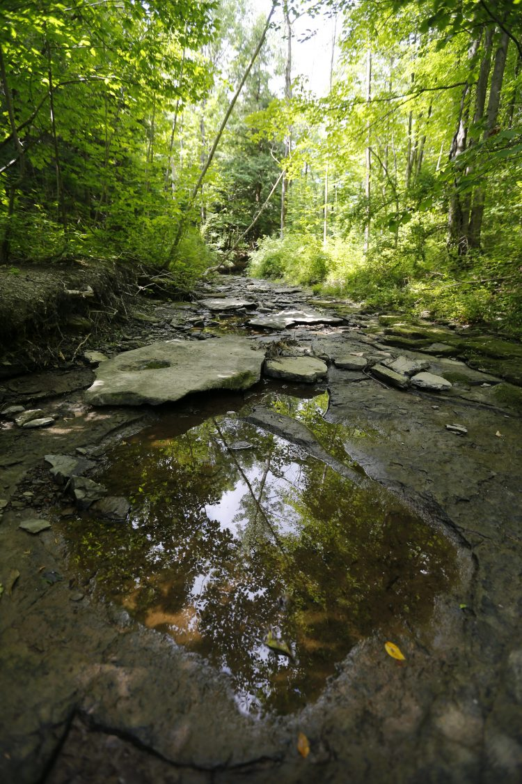The WNY Land Conservancy preserved this 57-acre parcel of land, now known as Owens Falls Sanctuary. (Mark Mulville/Buffalo News)
